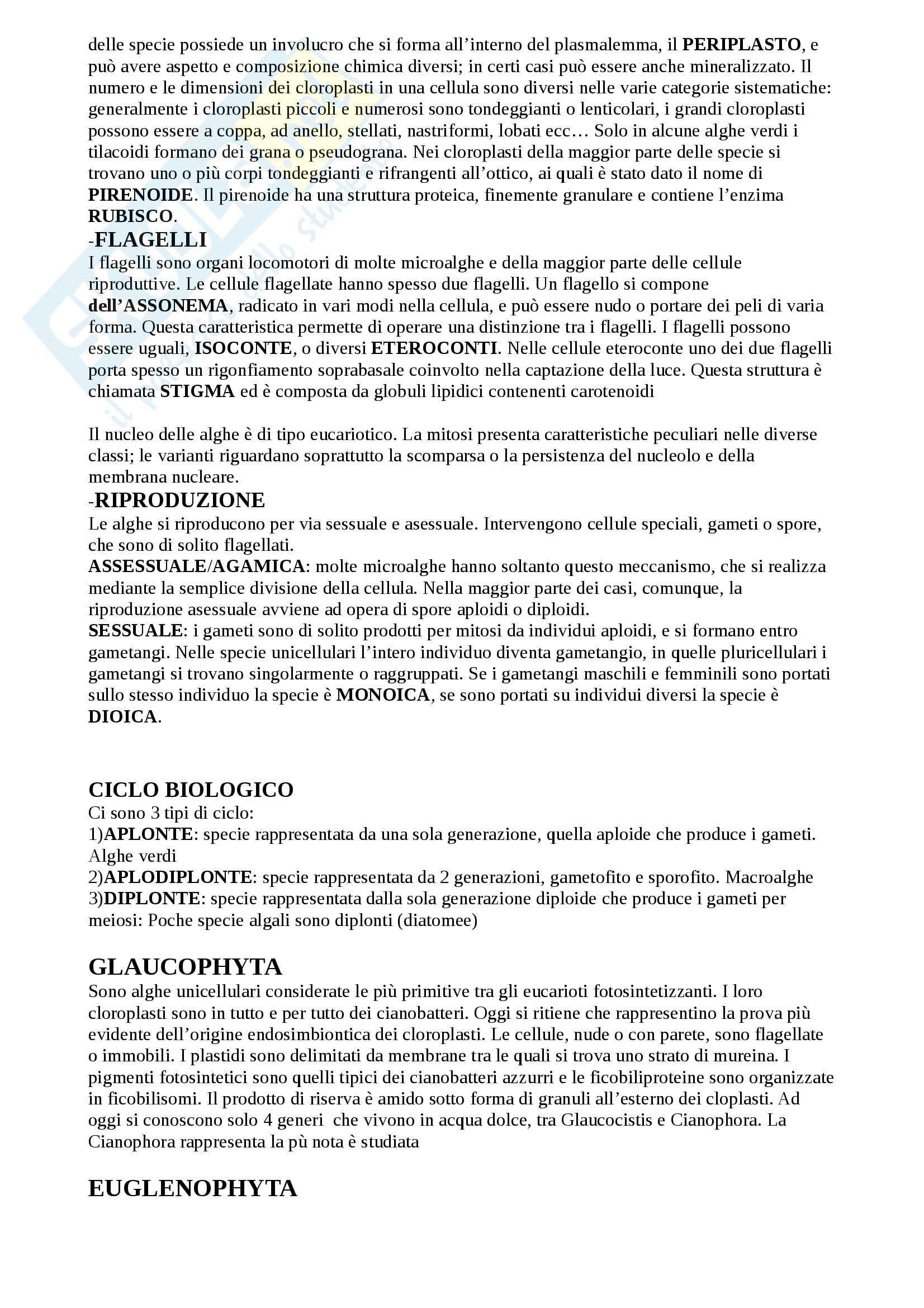 Riassunto esame Botanica Generale, prof. Papini Pag. 6