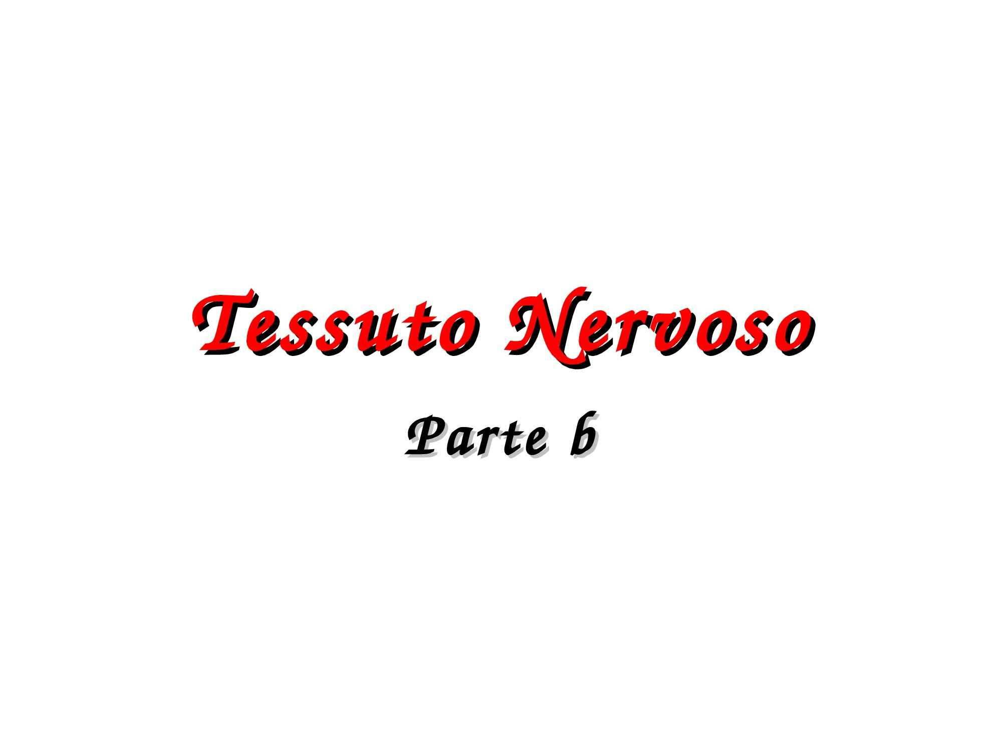 Tessuto nervoso e Sistema Nervoso