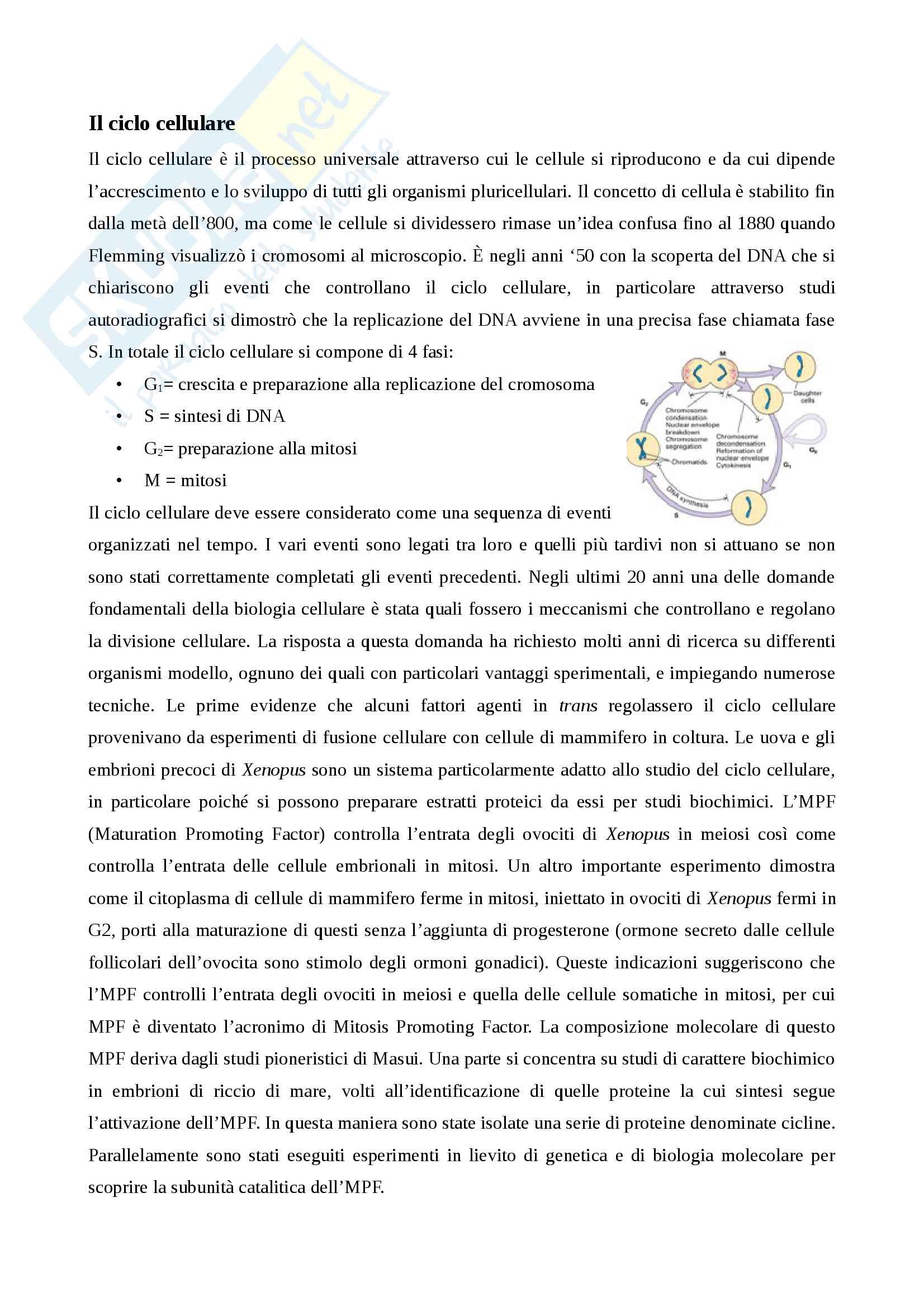 Appunti completi per l'esame di Biologia Cellulare