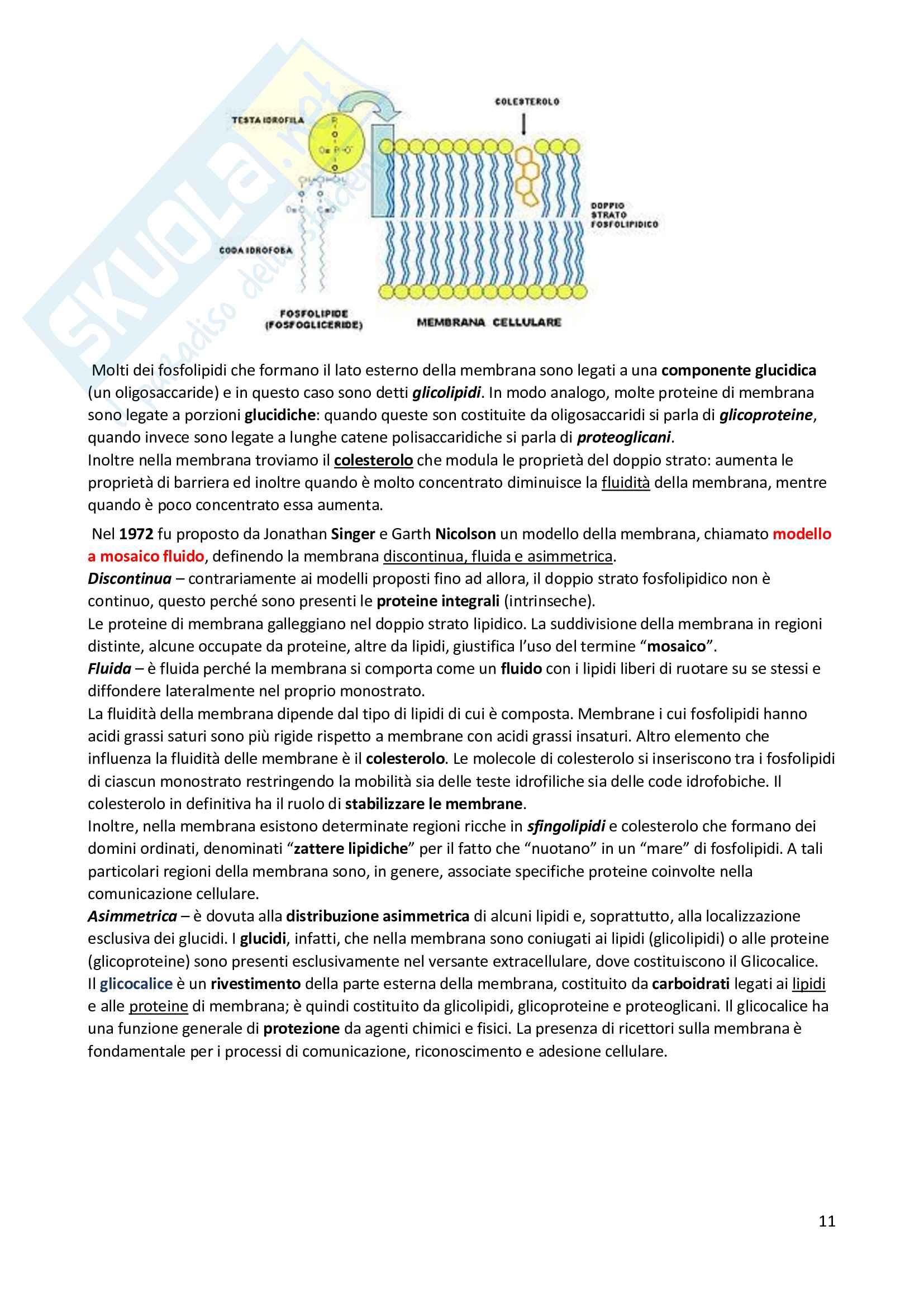 Riassunto di Biologia: utile alla preparazione ai test d'ammissione per le facoltà scientifiche Pag. 11
