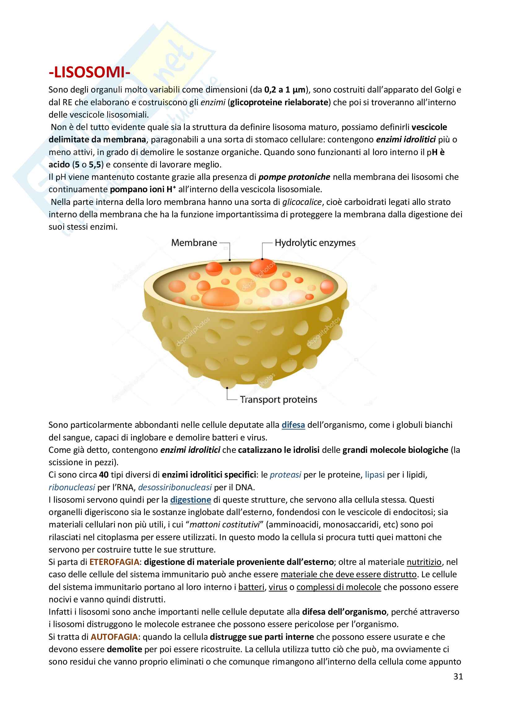Riassunto di Biologia: utile alla preparazione ai test d'ammissione per le facoltà scientifiche Pag. 31