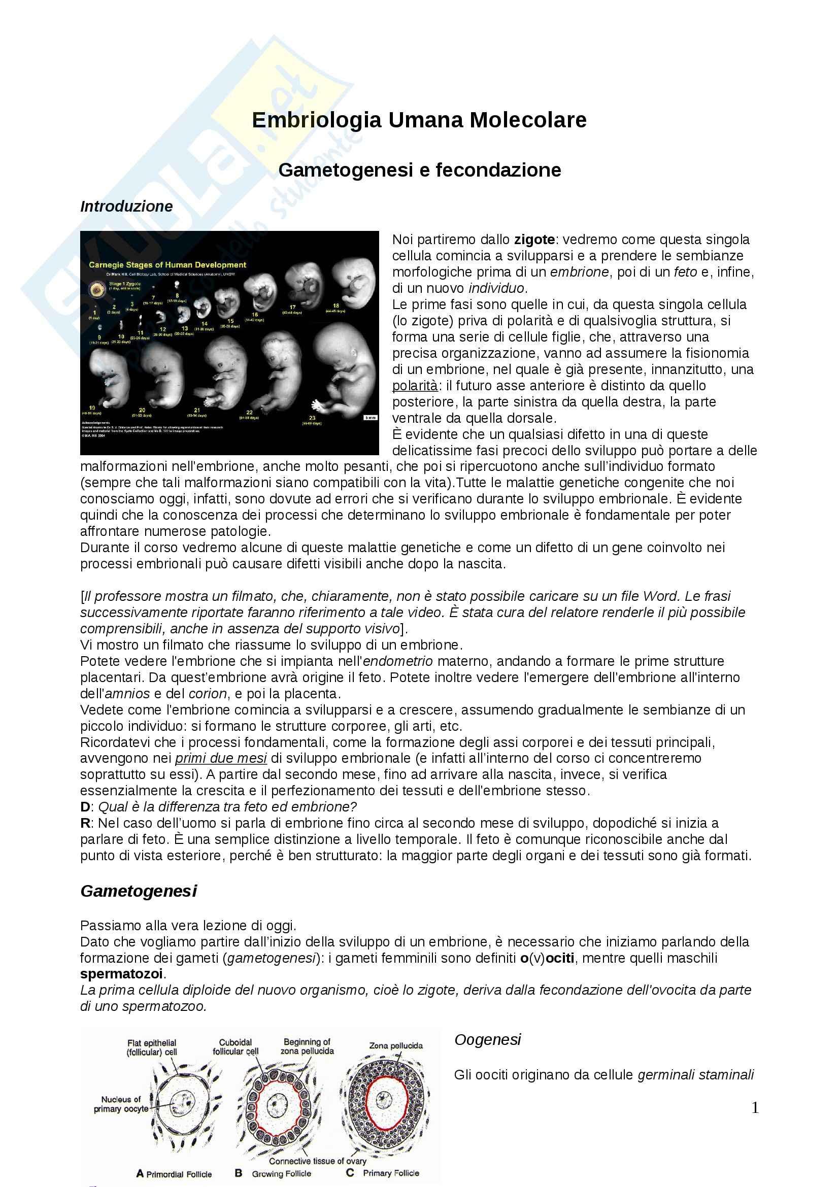 Genetica - gametogenesi e fecondazione