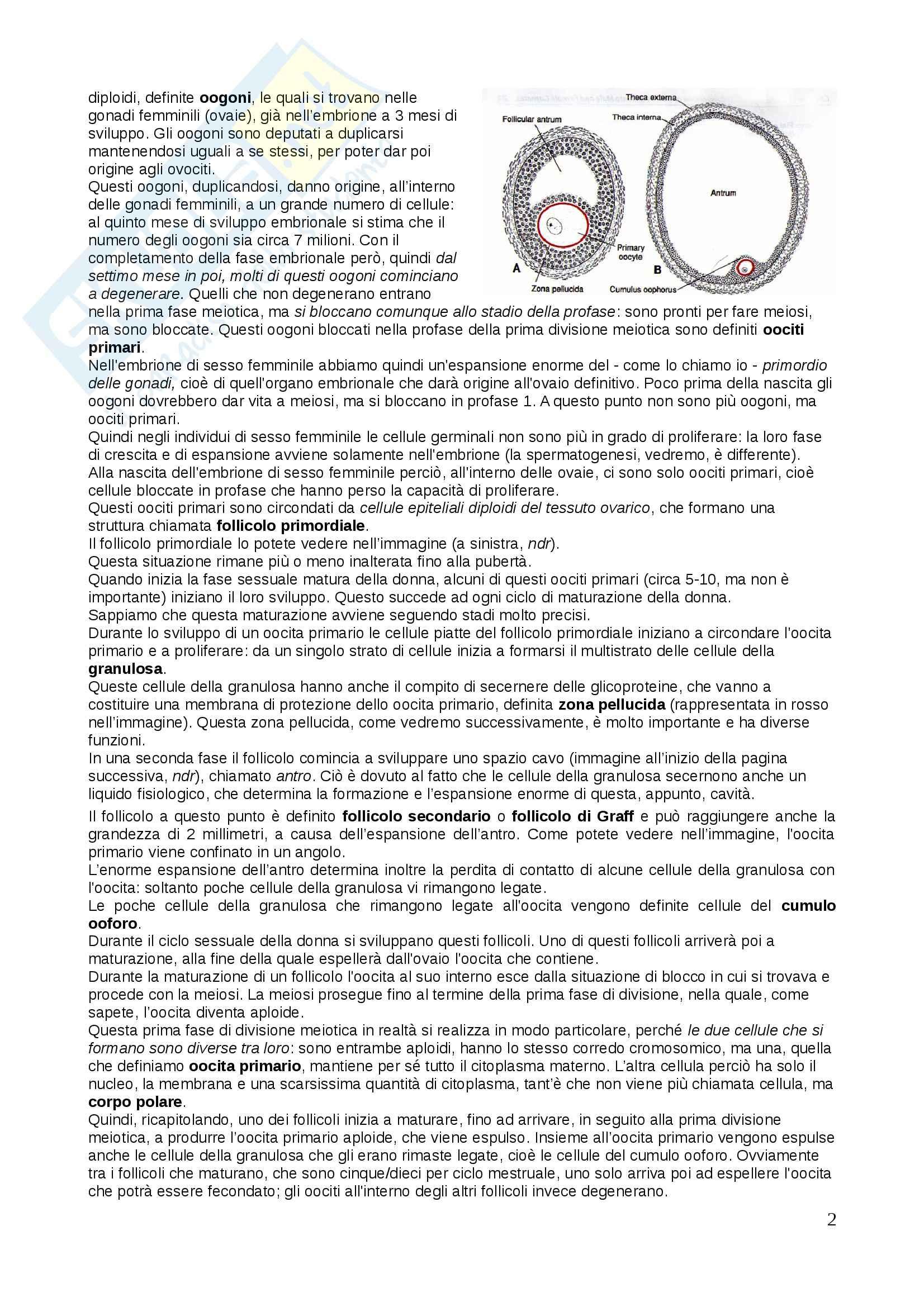 Genetica - gametogenesi e fecondazione Pag. 2