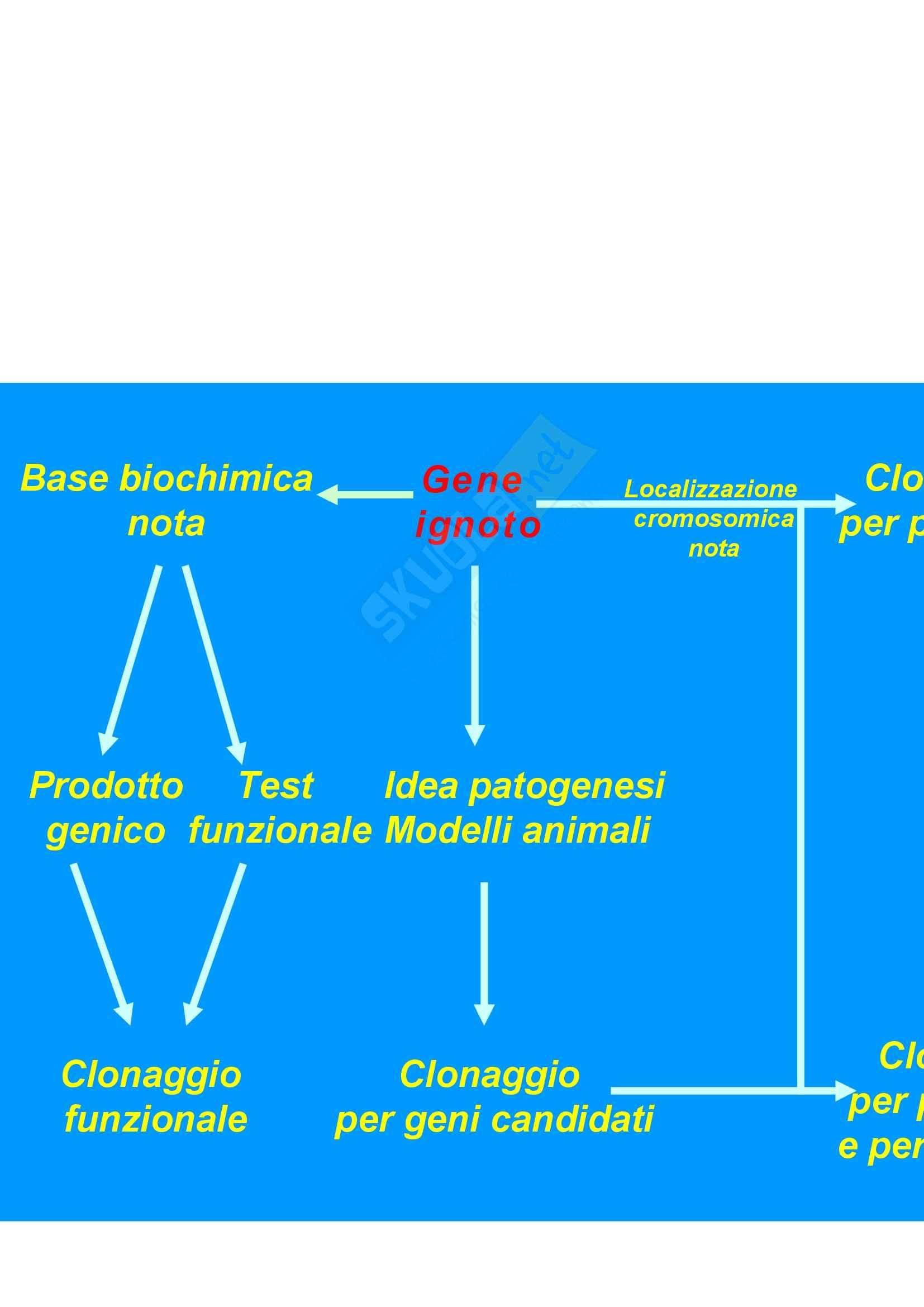 Biologia generale e genetica - clonazione di un gene Pag. 2