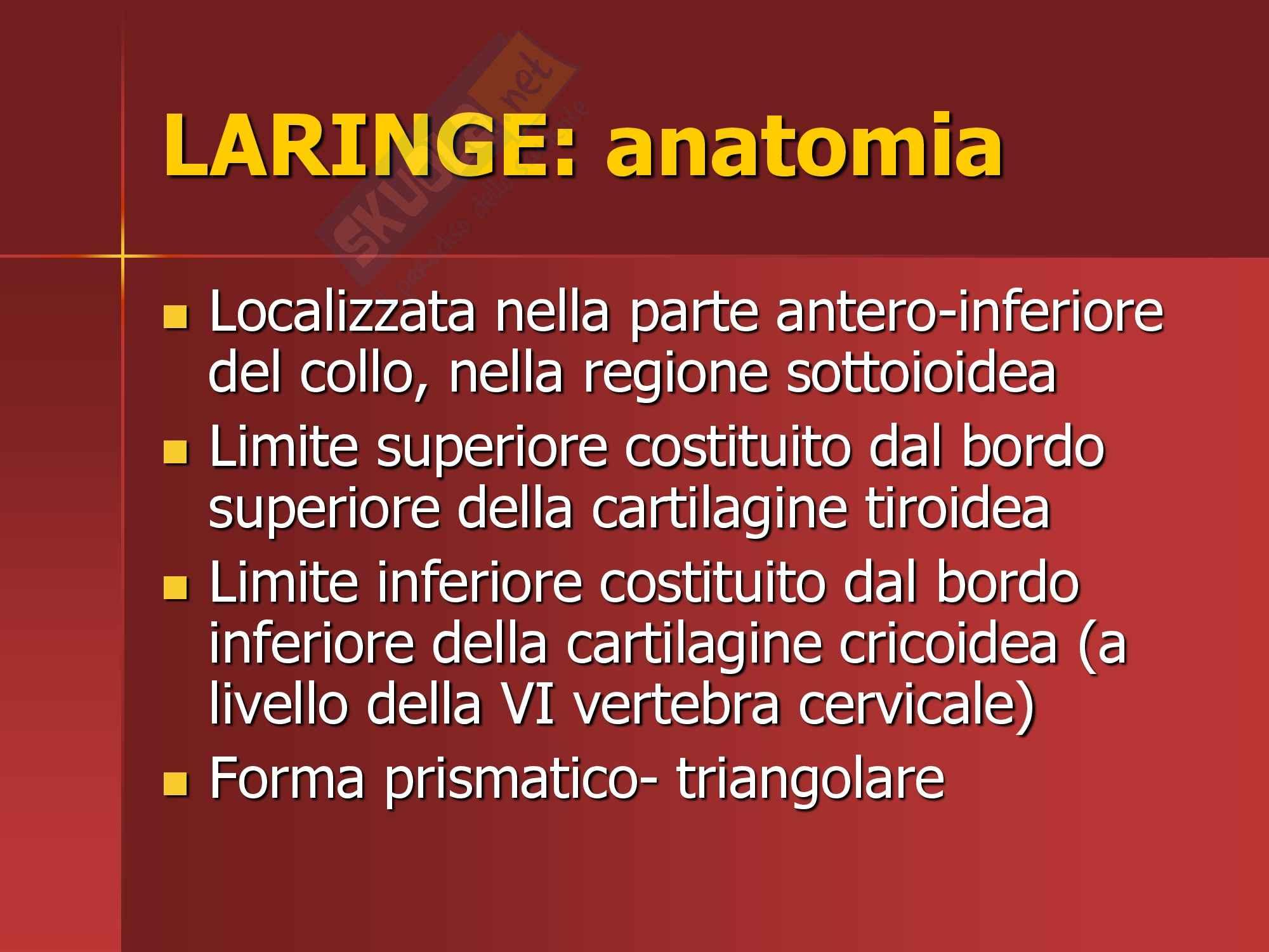 Otorinolaringoiatria - anatomia laringe