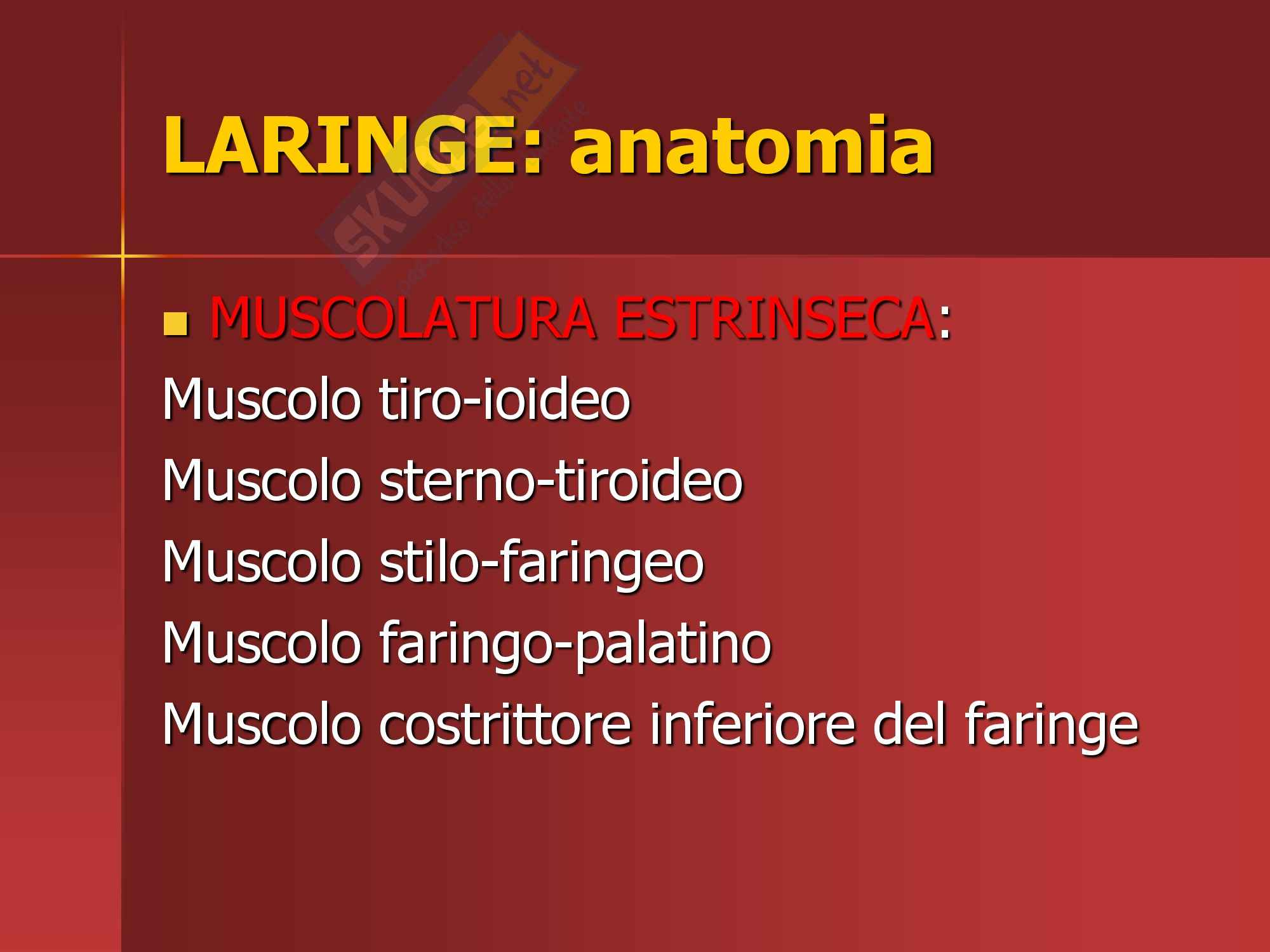 Otorinolaringoiatria - anatomia laringe Pag. 11