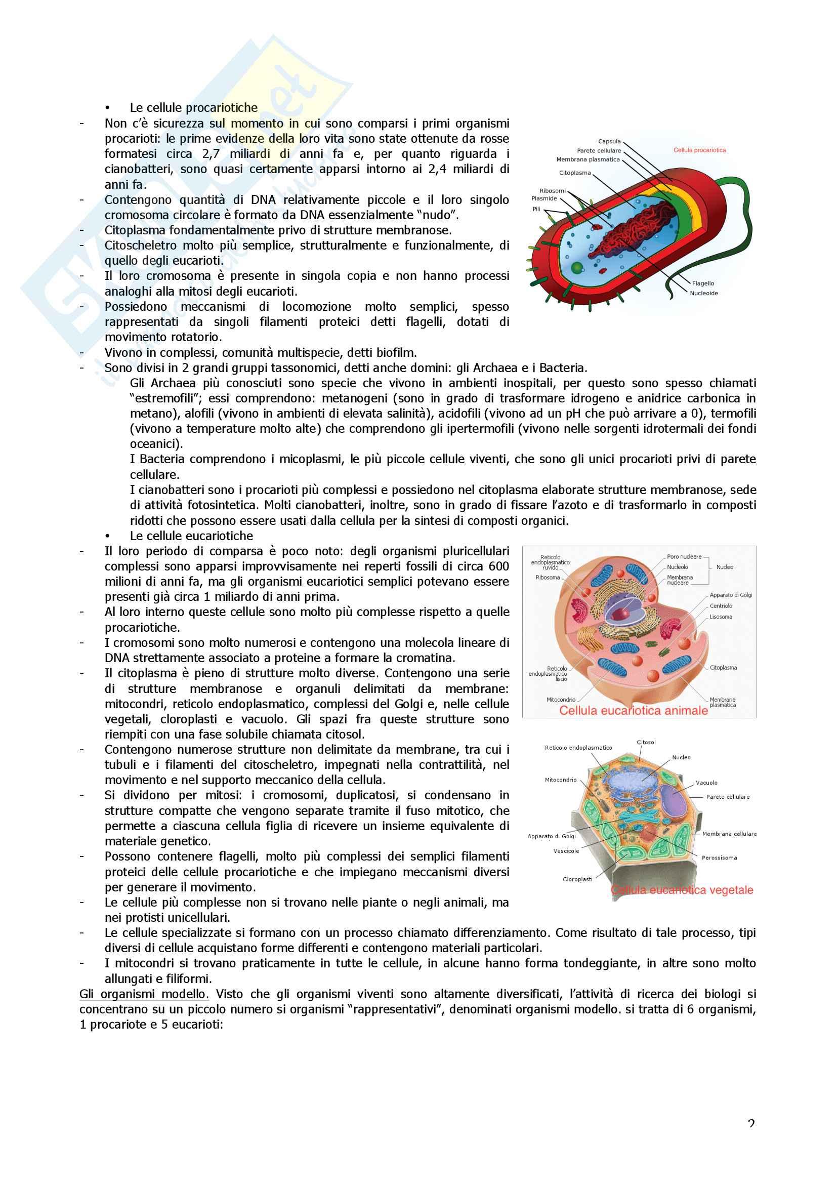 Esame di citologia Pag. 2