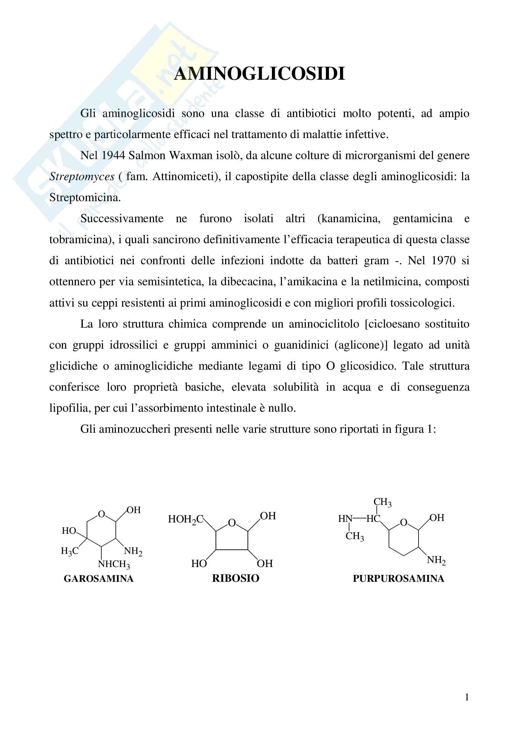 Farmacologia generale - aminoglicosidi