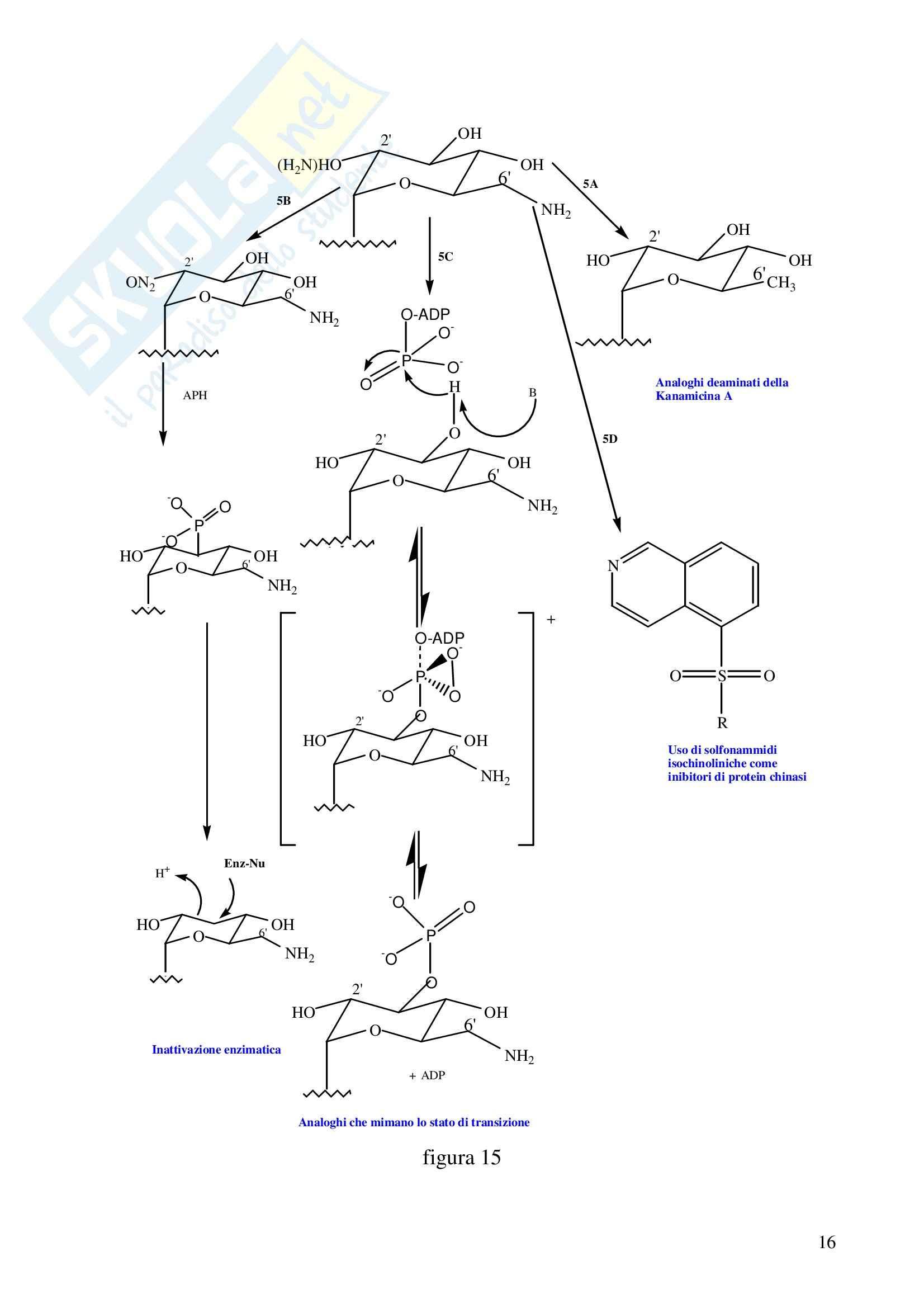 Farmacologia generale - aminoglicosidi Pag. 16