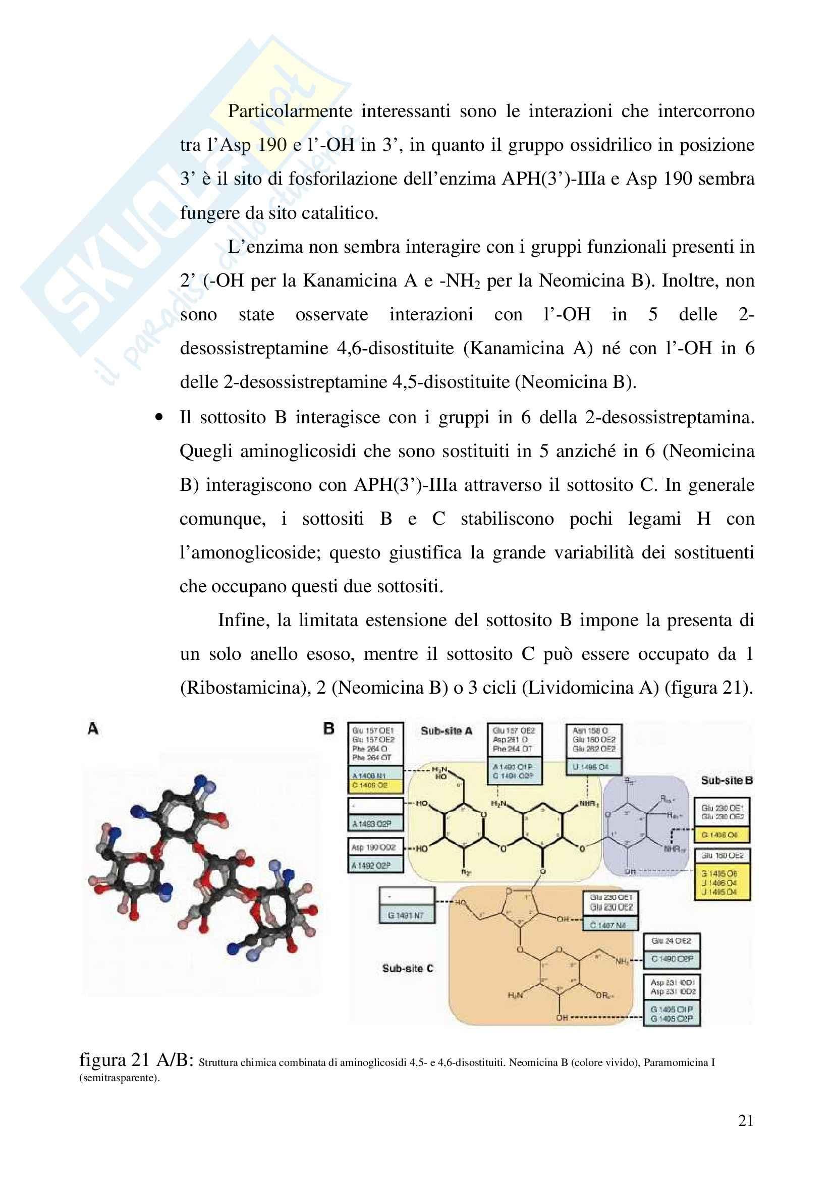 Farmacologia generale - aminoglicosidi Pag. 21