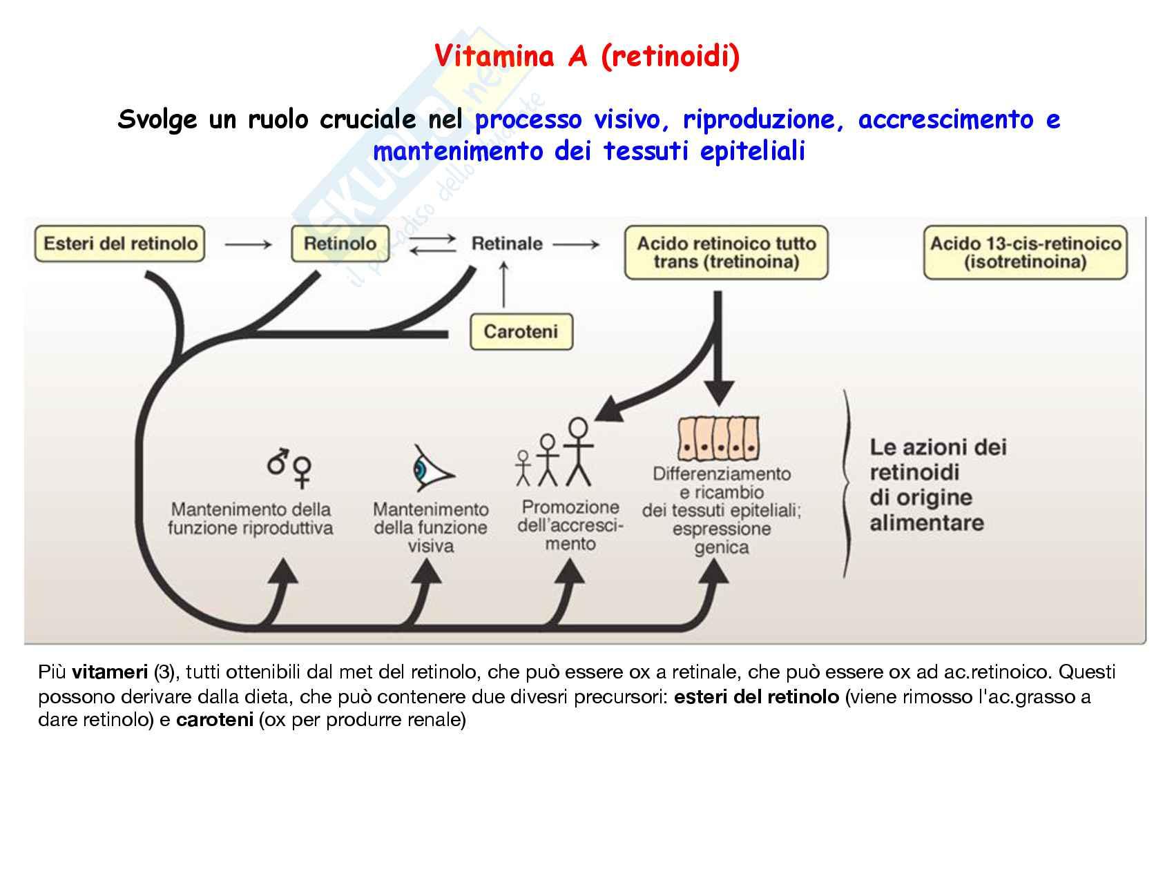 32 Vitamine A e K: struttura e funzioni Pag. 2