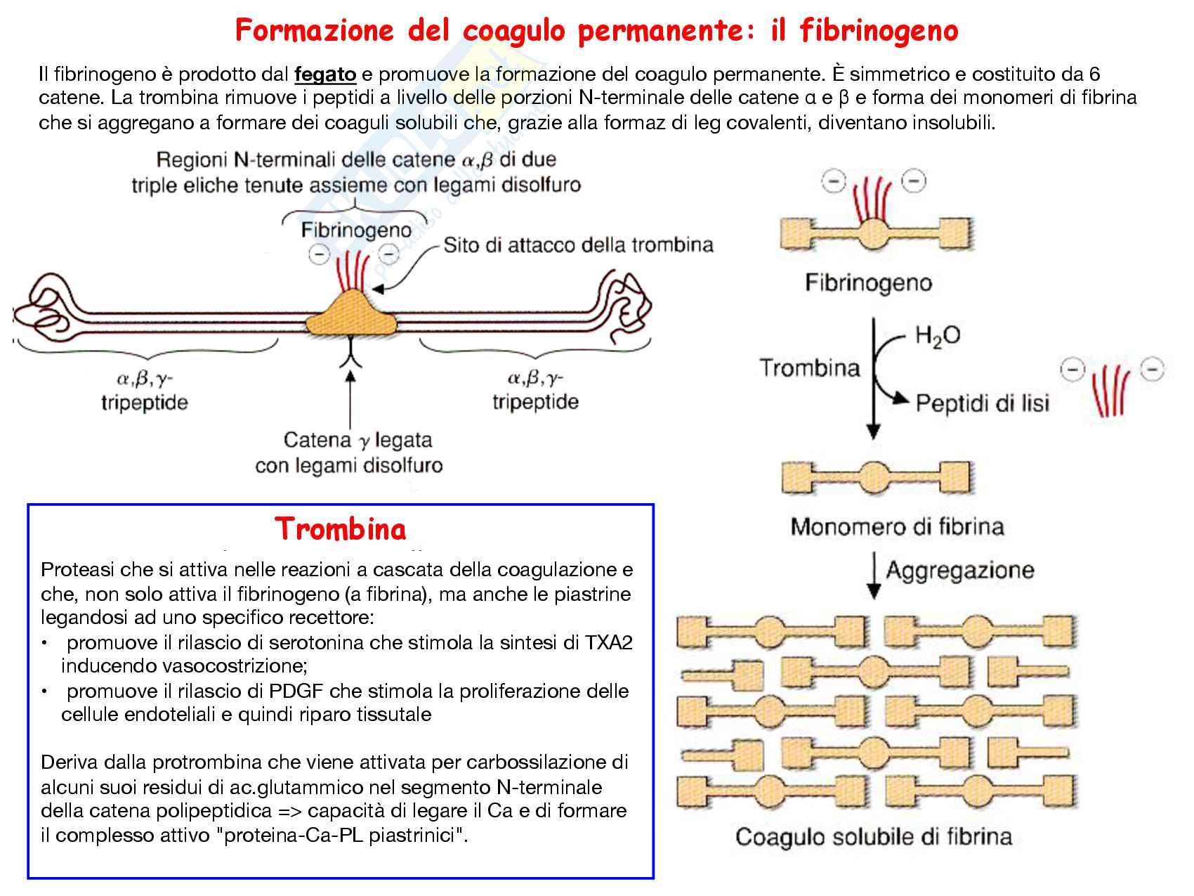 32 Vitamine A e K: struttura e funzioni Pag. 26