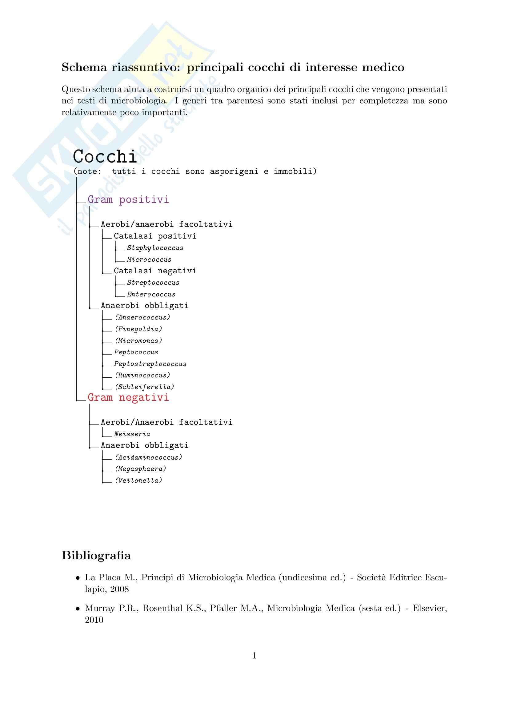 Cocchi - Schema