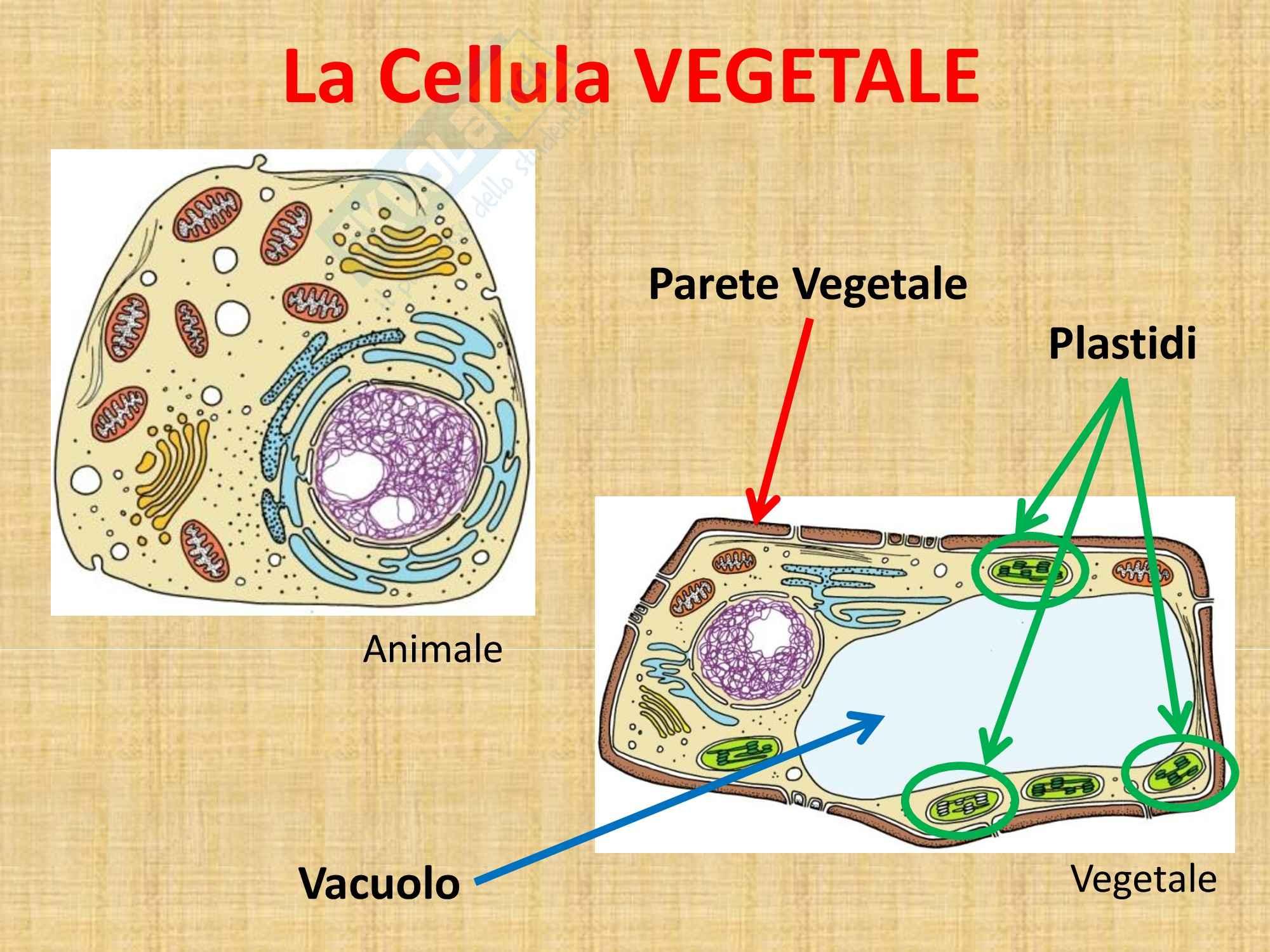 Biologia vegetale - i plastidi Pag. 2
