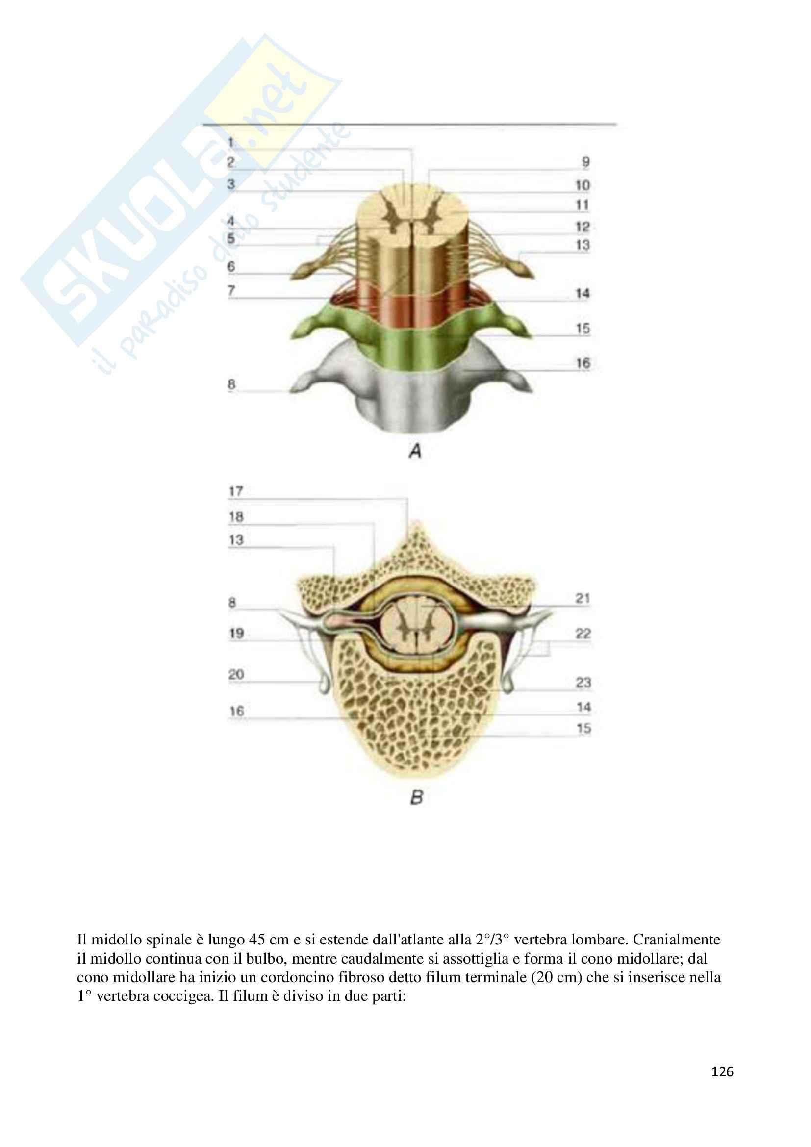 Sistema Nervoso Centrale, Anatomia Pag. 126