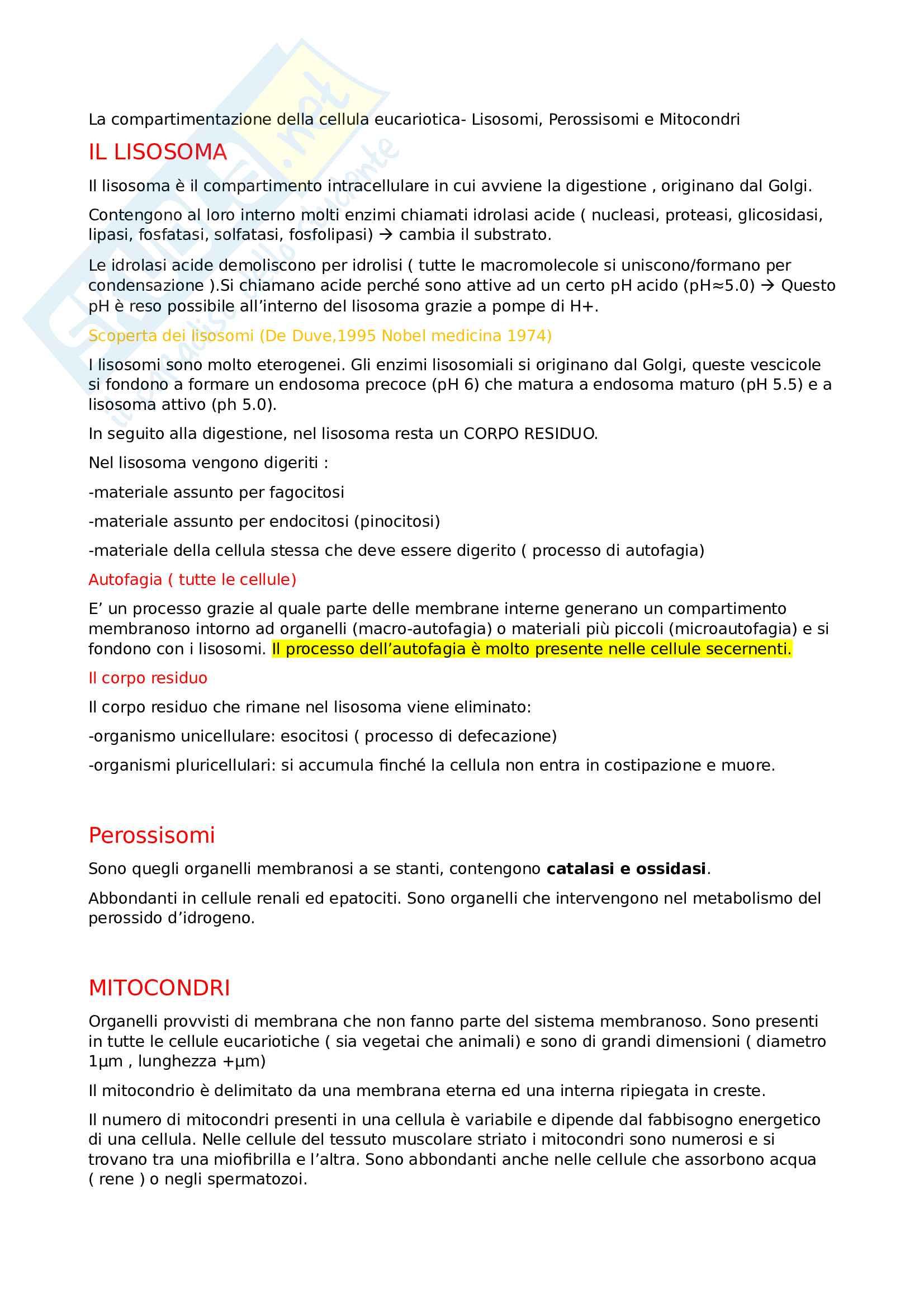 Appunti biologia cellulare - Compartimentazione cellulare: lisosomi perossisomi e mitocondri con respirazione cellulare