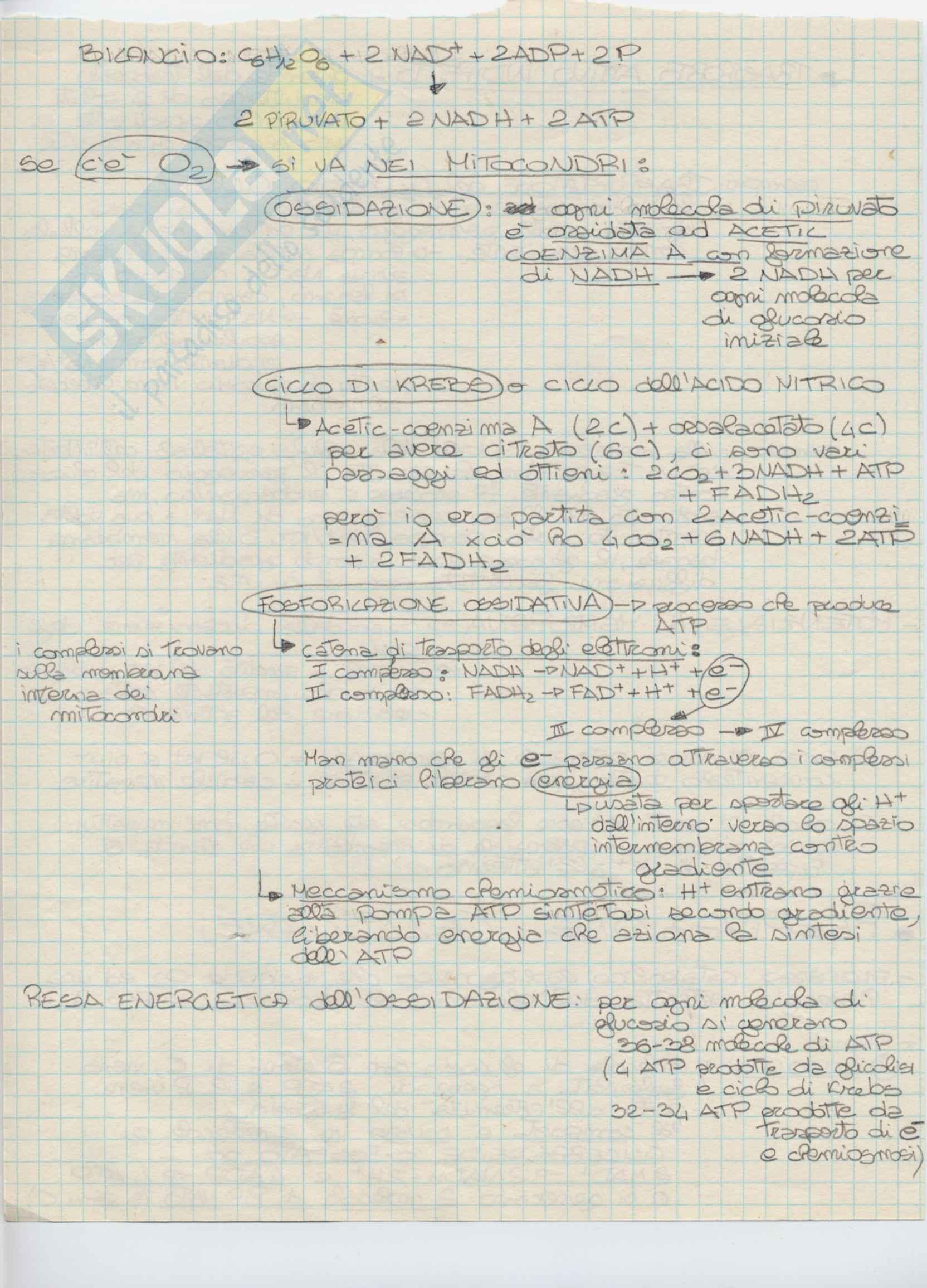 Biologia animale - Appunti parte 2 Pag. 6