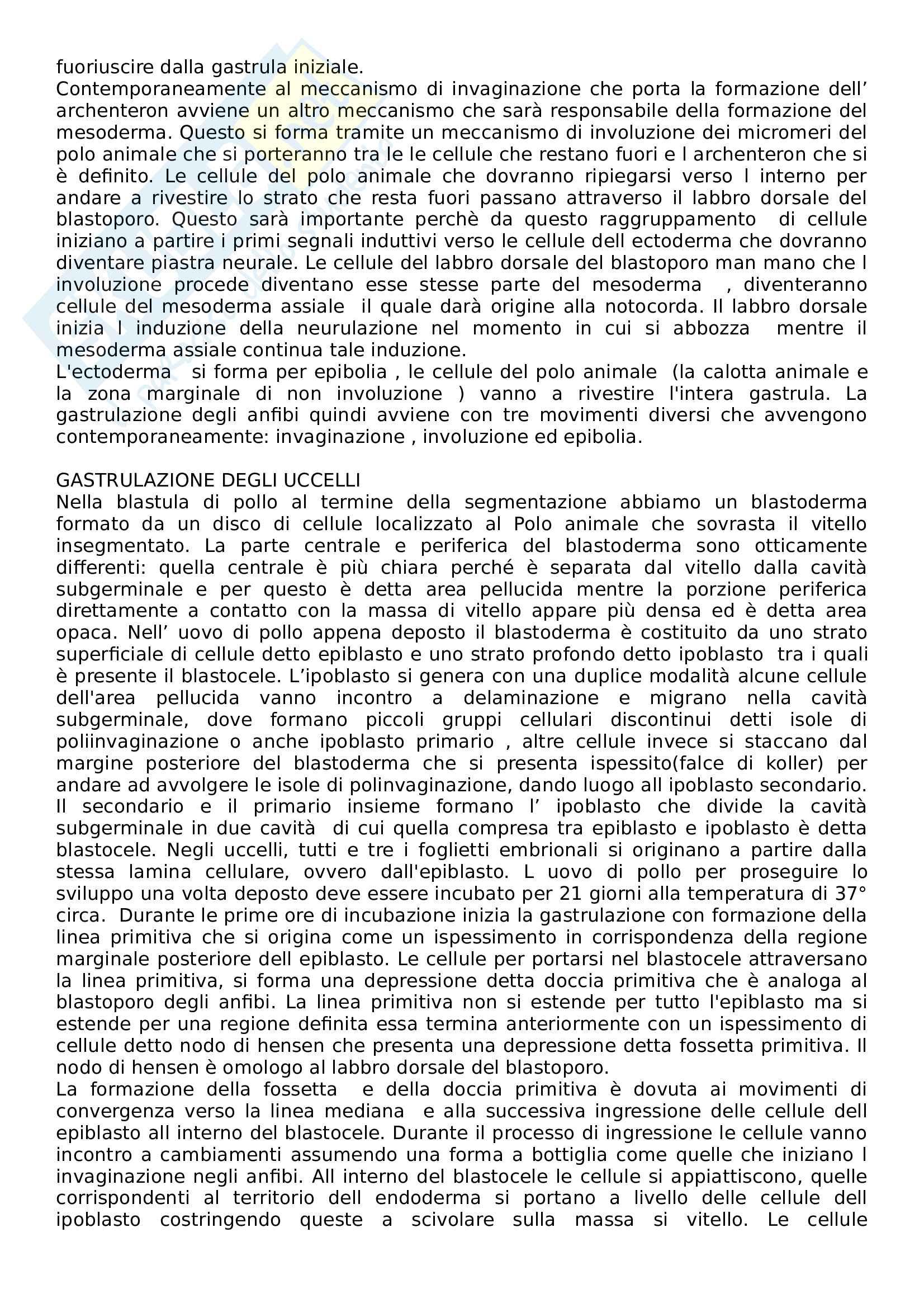 Biologia dello sviluppo Pag. 26