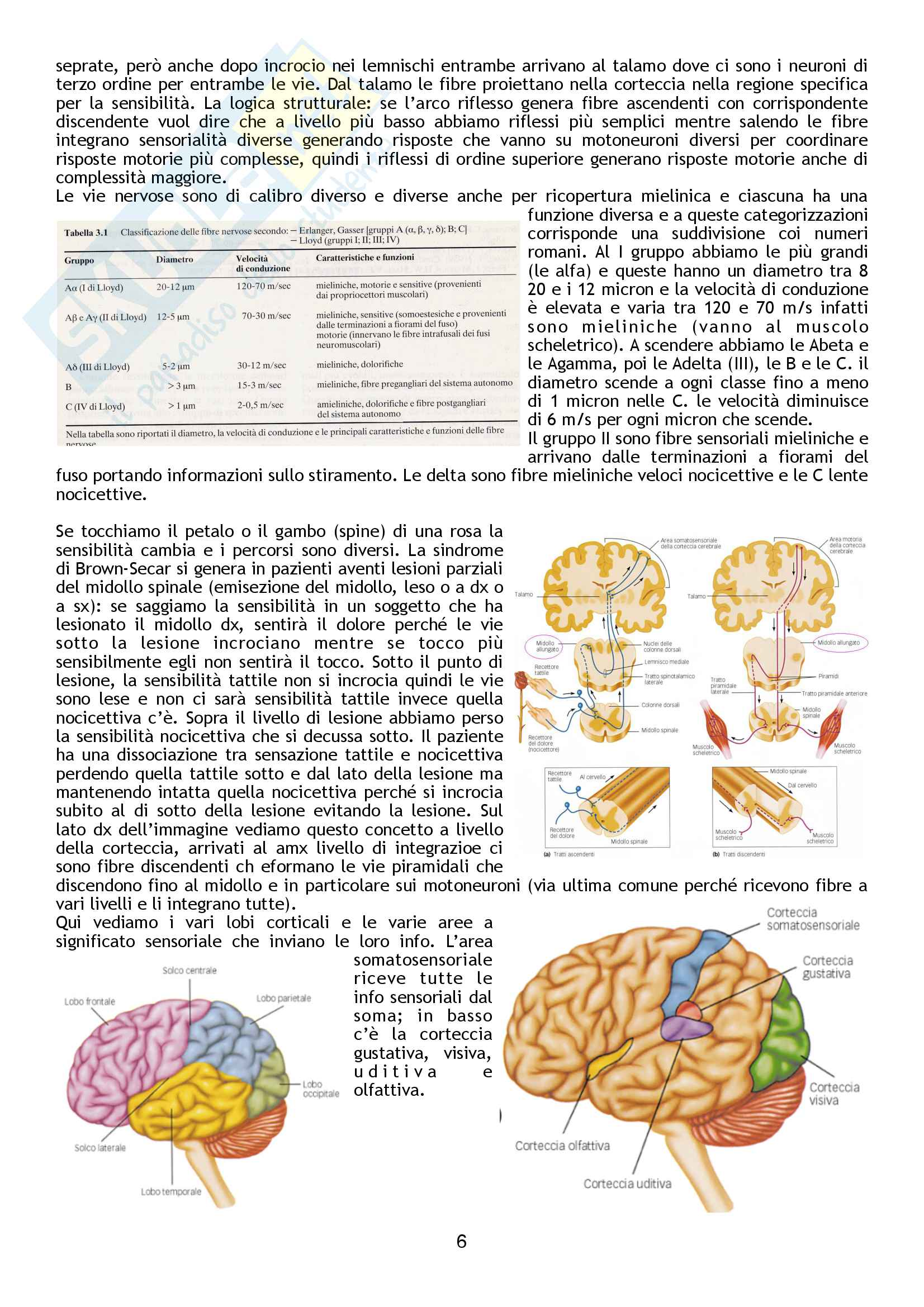 Fisiologia Pag. 86