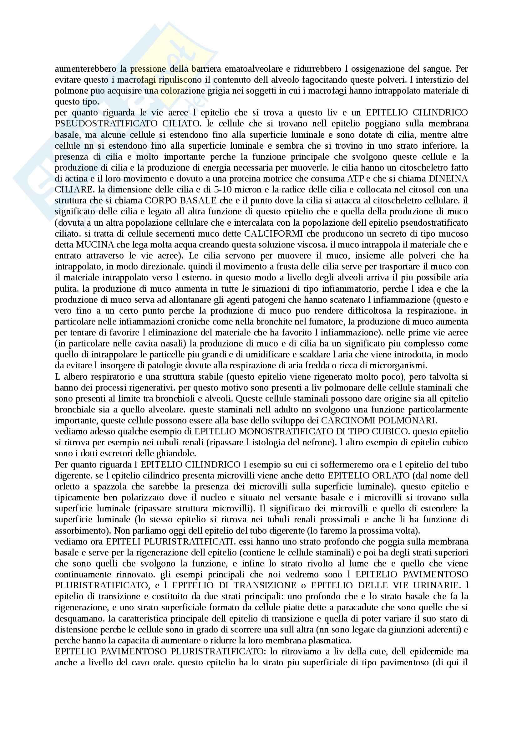 Anatomia e Istologia - Appunti Pag. 31