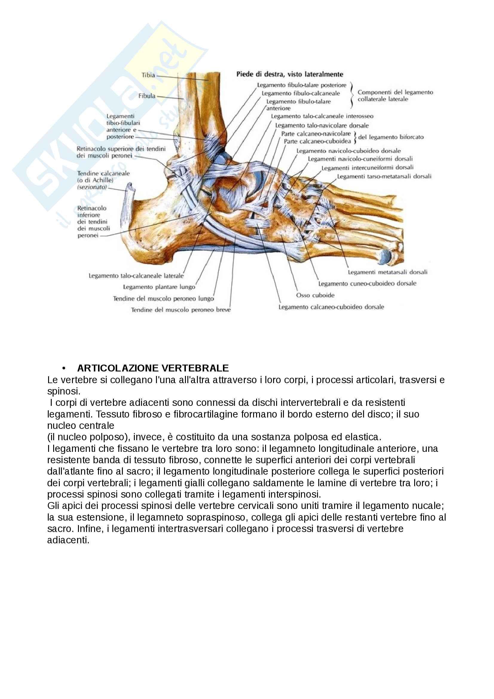 Anatomia 2 tessuti scheletrici e articolazioni Pag. 16