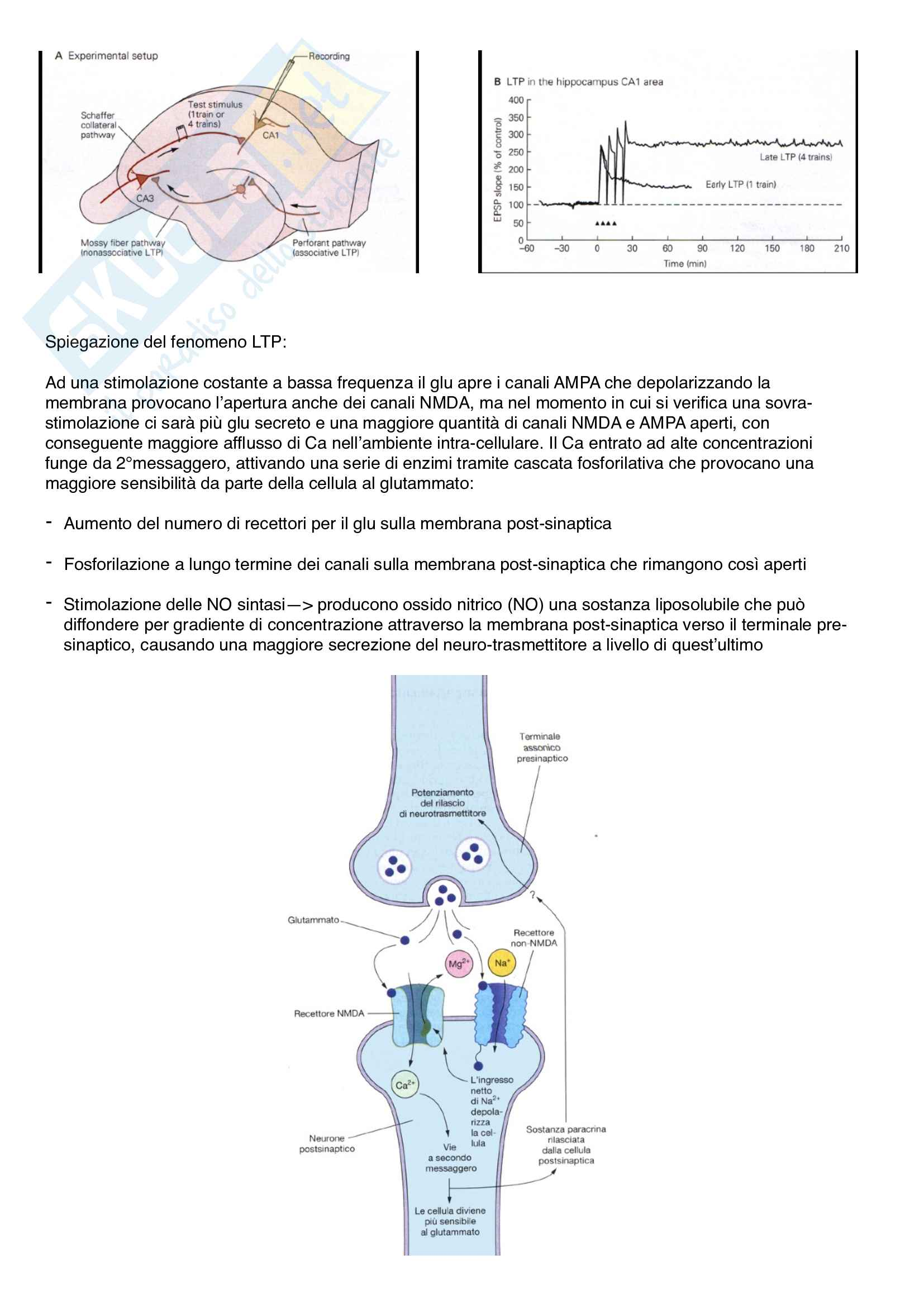 Fisiologia generale Pag. 36