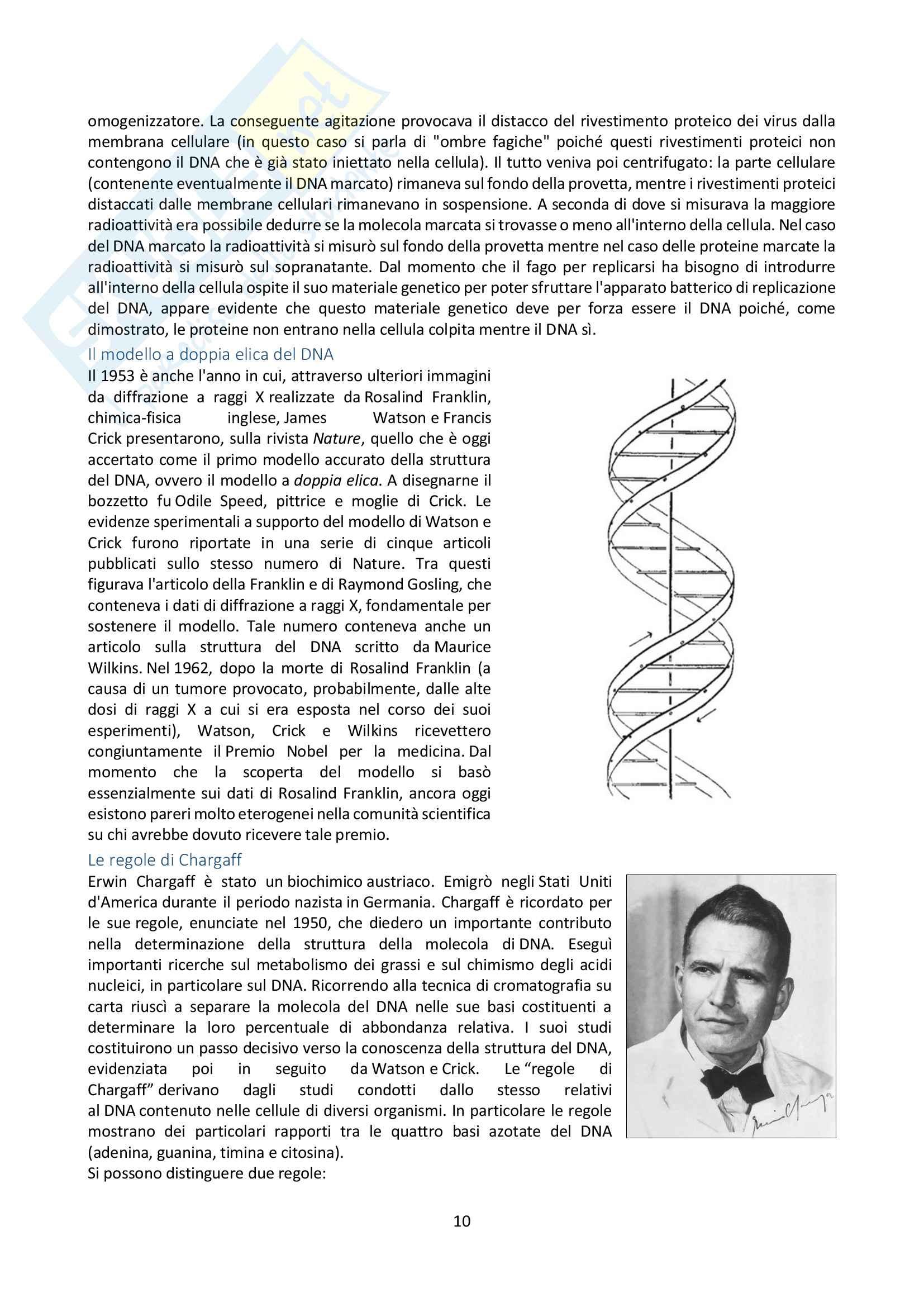 Appunti di Biologia Molecolare Pag. 11