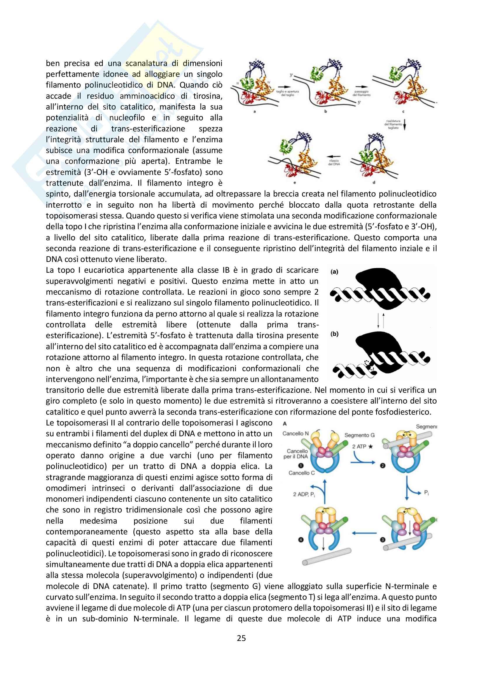 Appunti di Biologia Molecolare Pag. 26