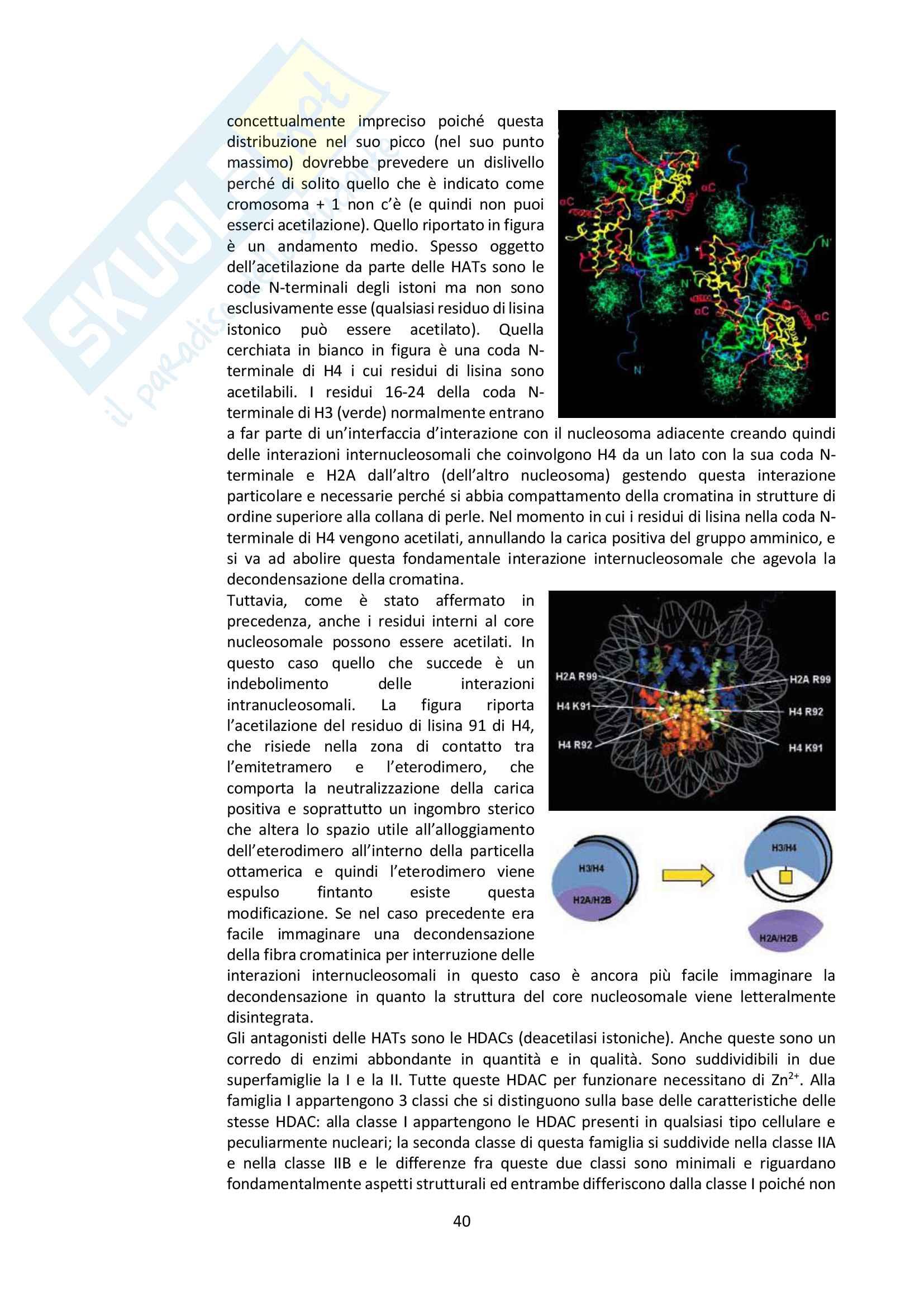 Appunti di Biologia Molecolare Pag. 41