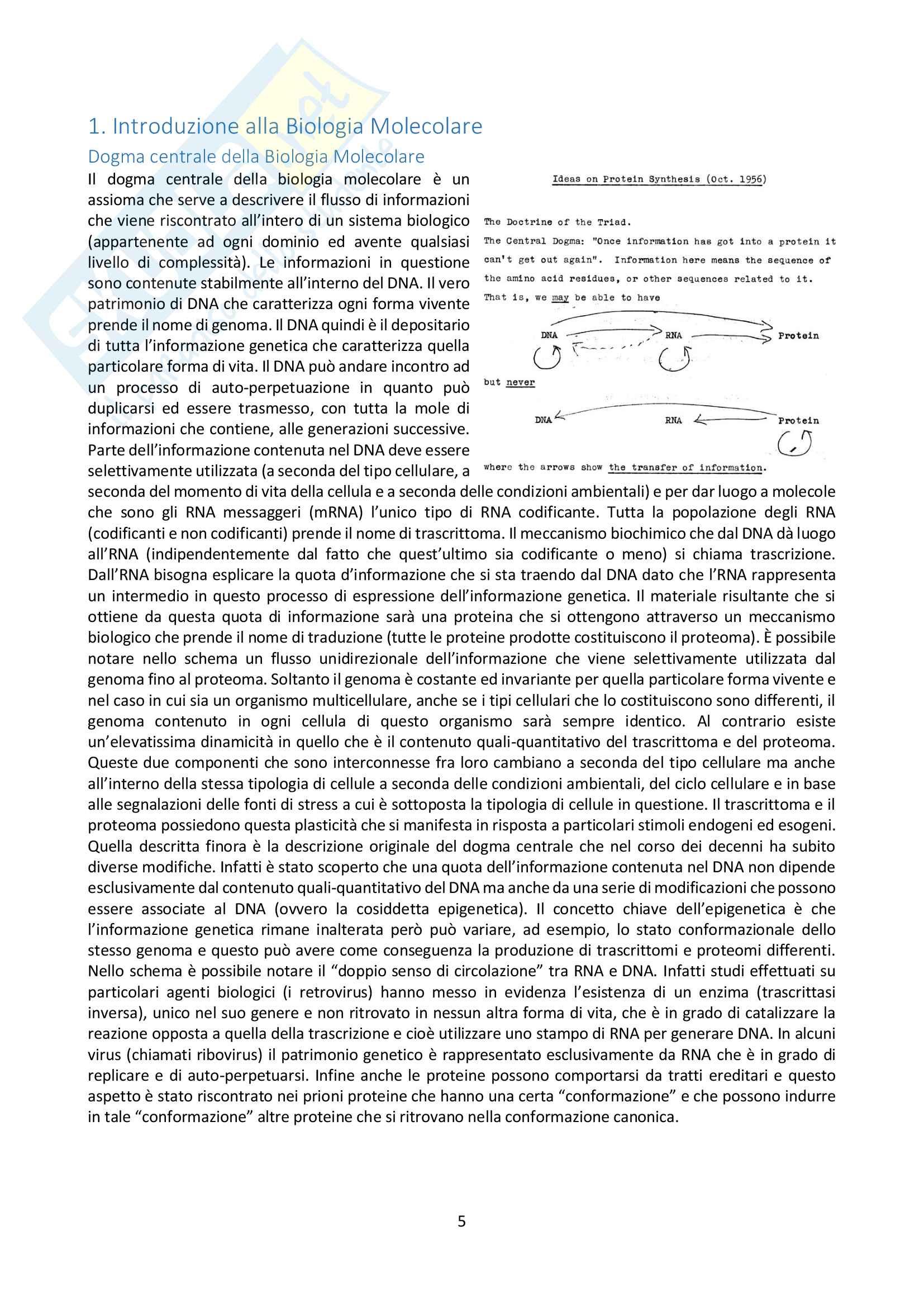Appunti di Biologia Molecolare Pag. 6
