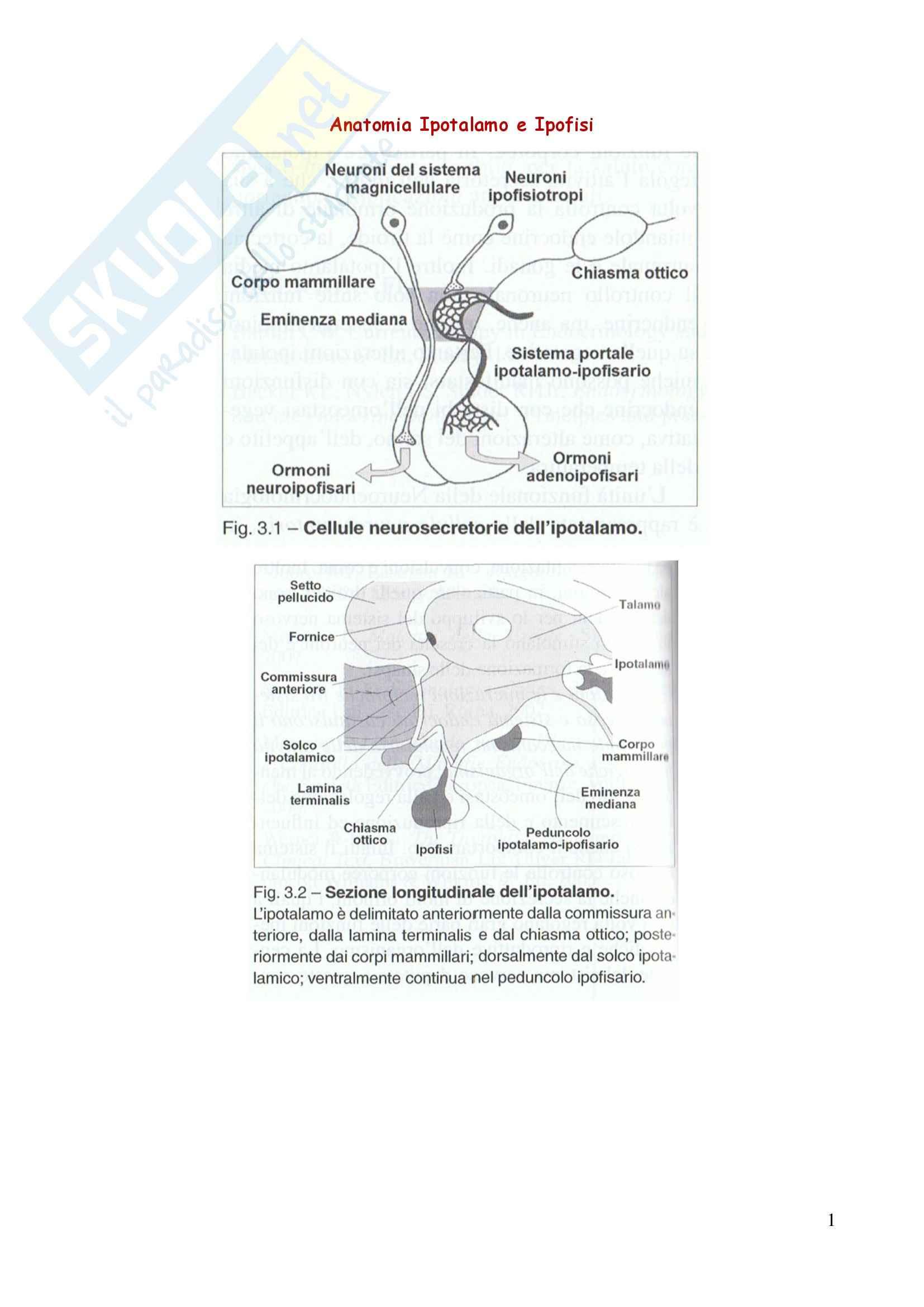 Endocrinologia - ipotalamo e ipofisi