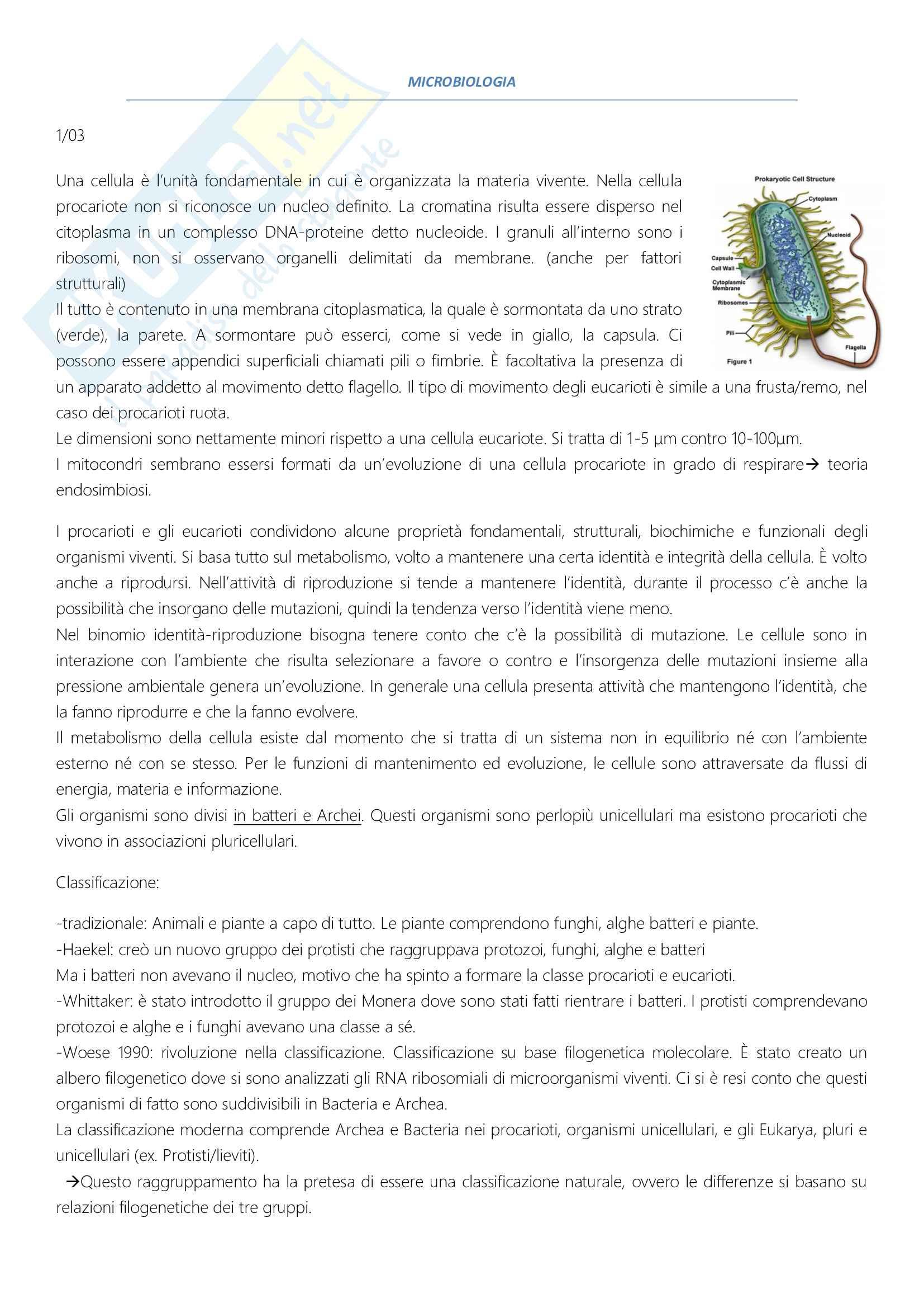 Appunti presi a lezione di microbiologia