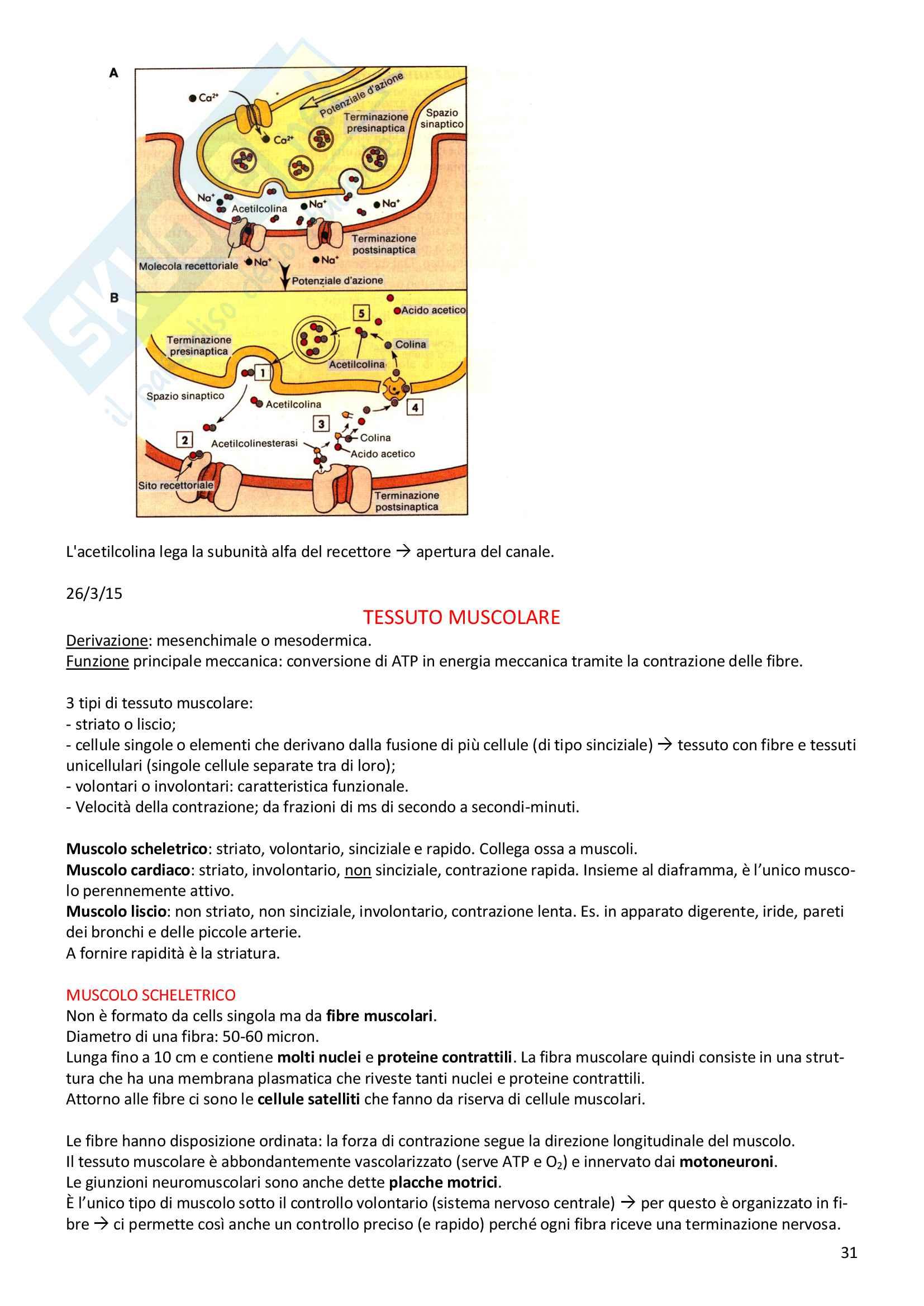 Istologia prof.re Medico Pag. 31
