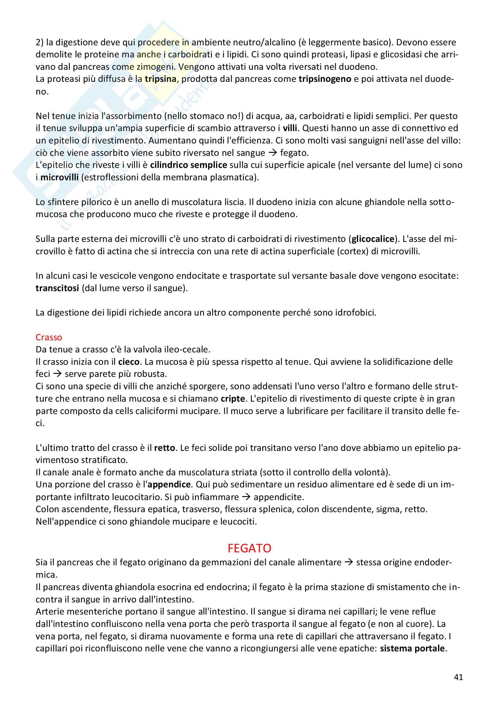 Istologia prof.re Medico Pag. 41