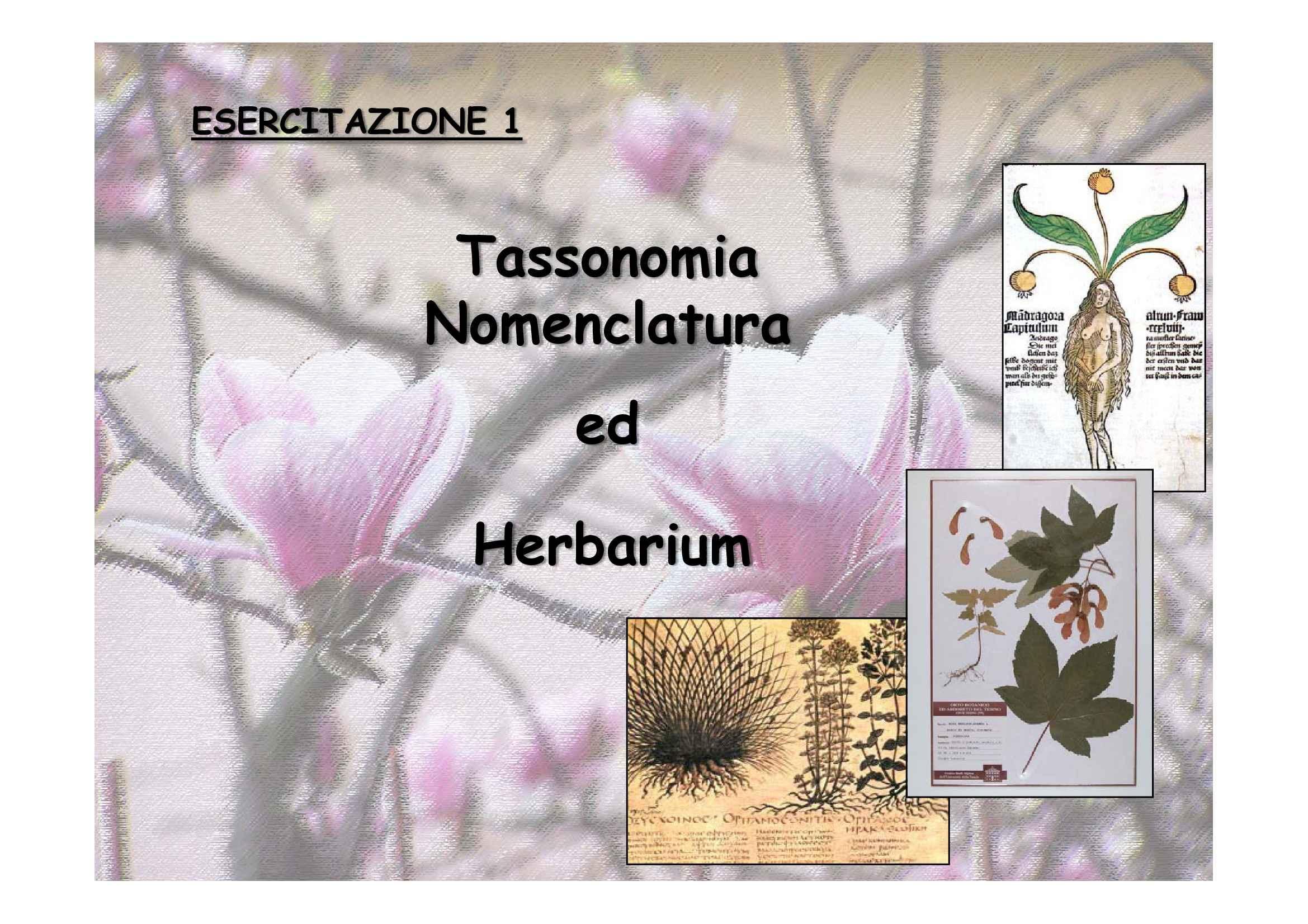 Tassonomia e nomenclatura delle piante