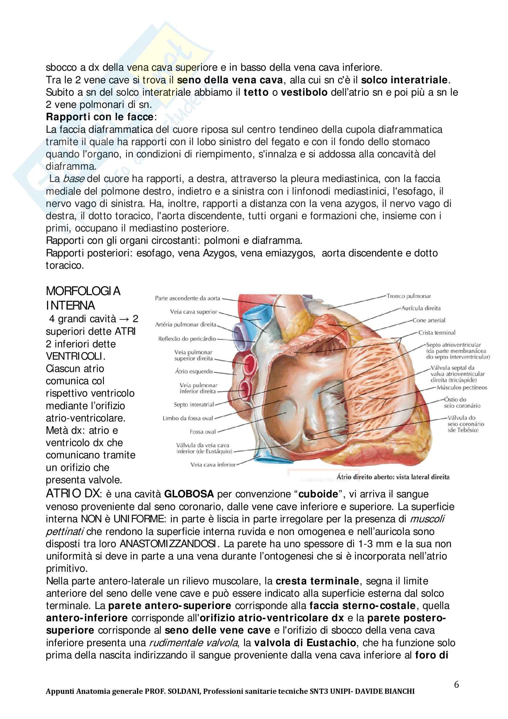 Anatomia per professioni sanitarie Pag. 6