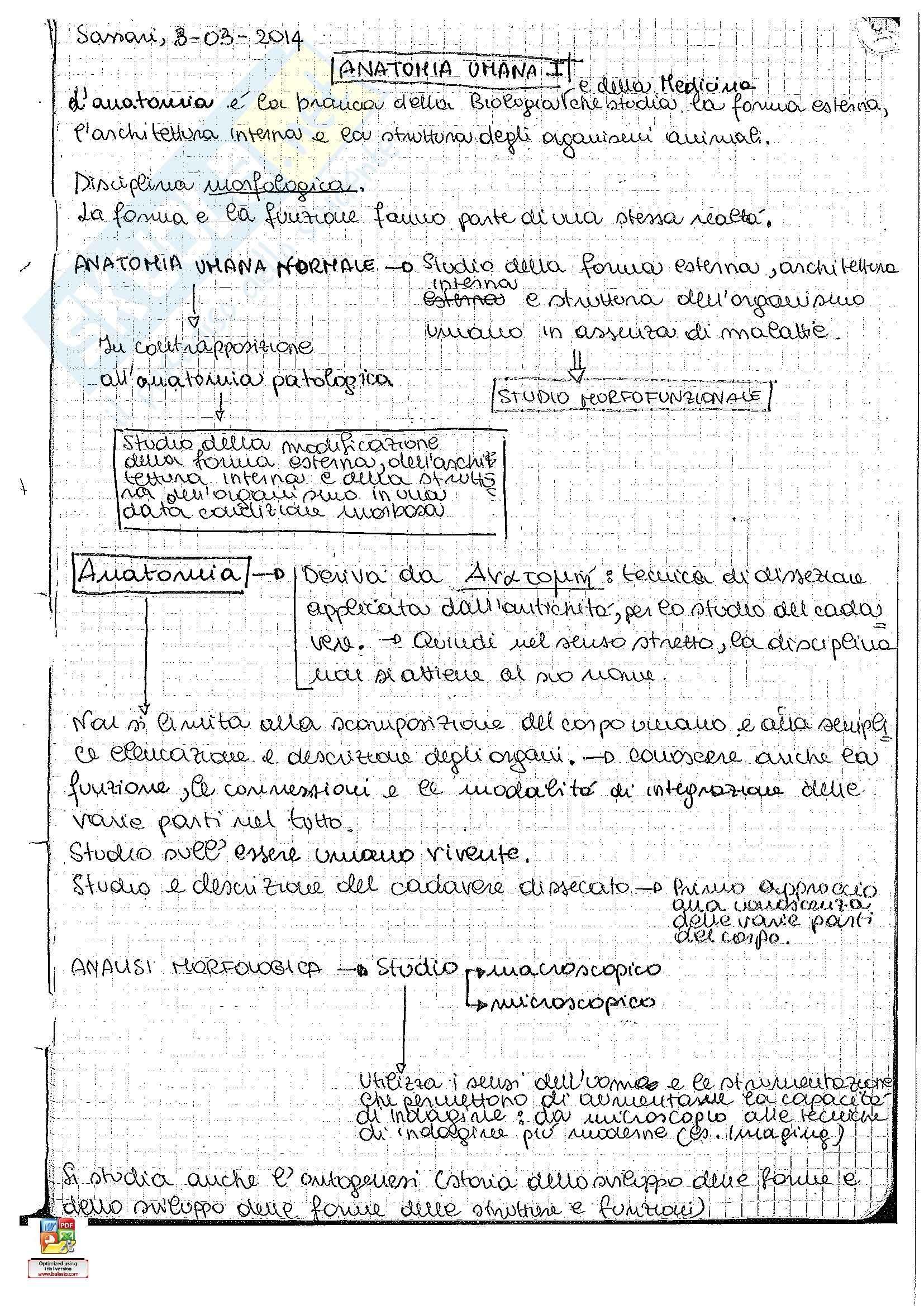 Riassunto esame Anatomia umana: seconda parte, prof. Pirino