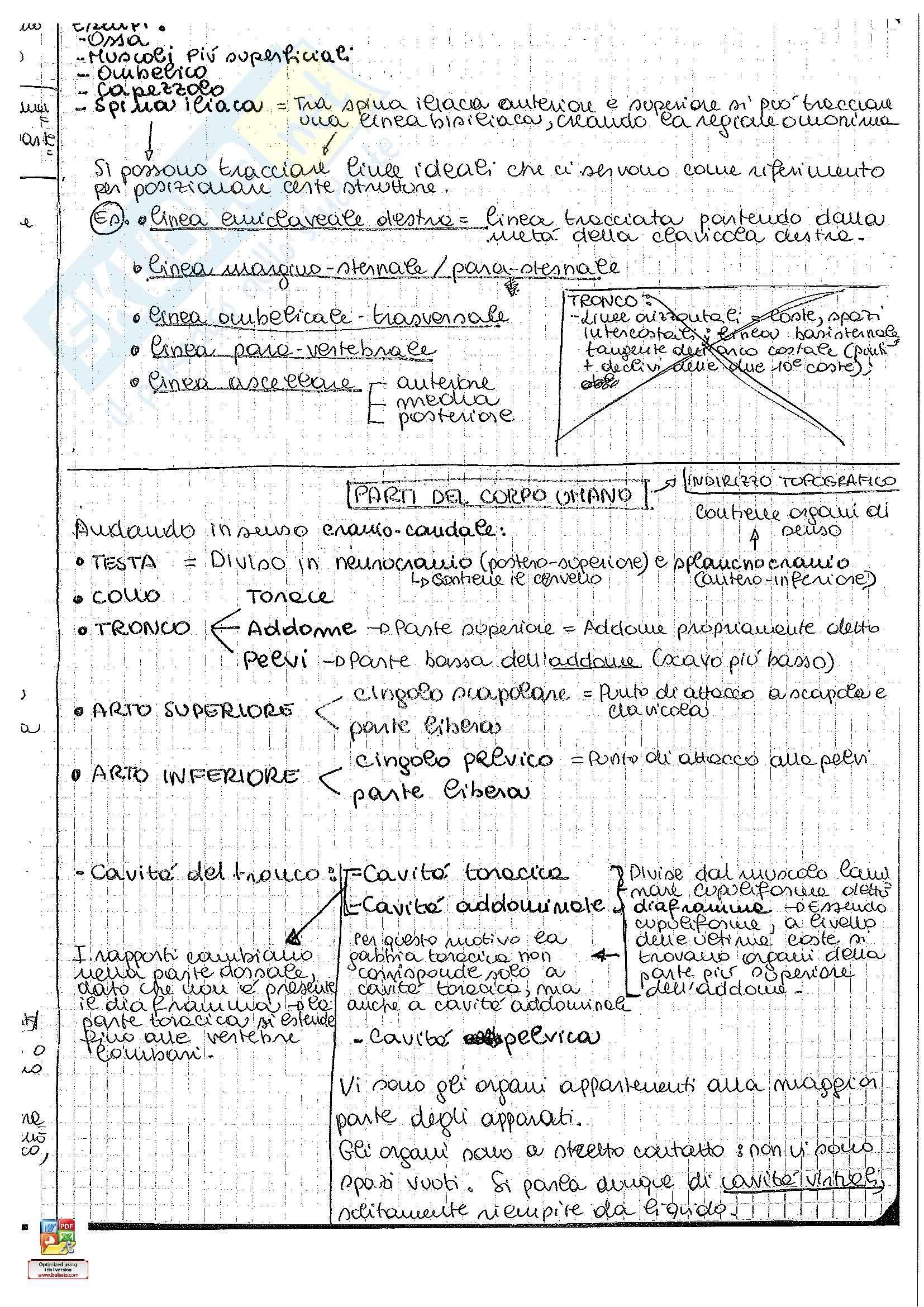 Riassunto esame Anatomia umana: seconda parte, prof. Pirino Pag. 11