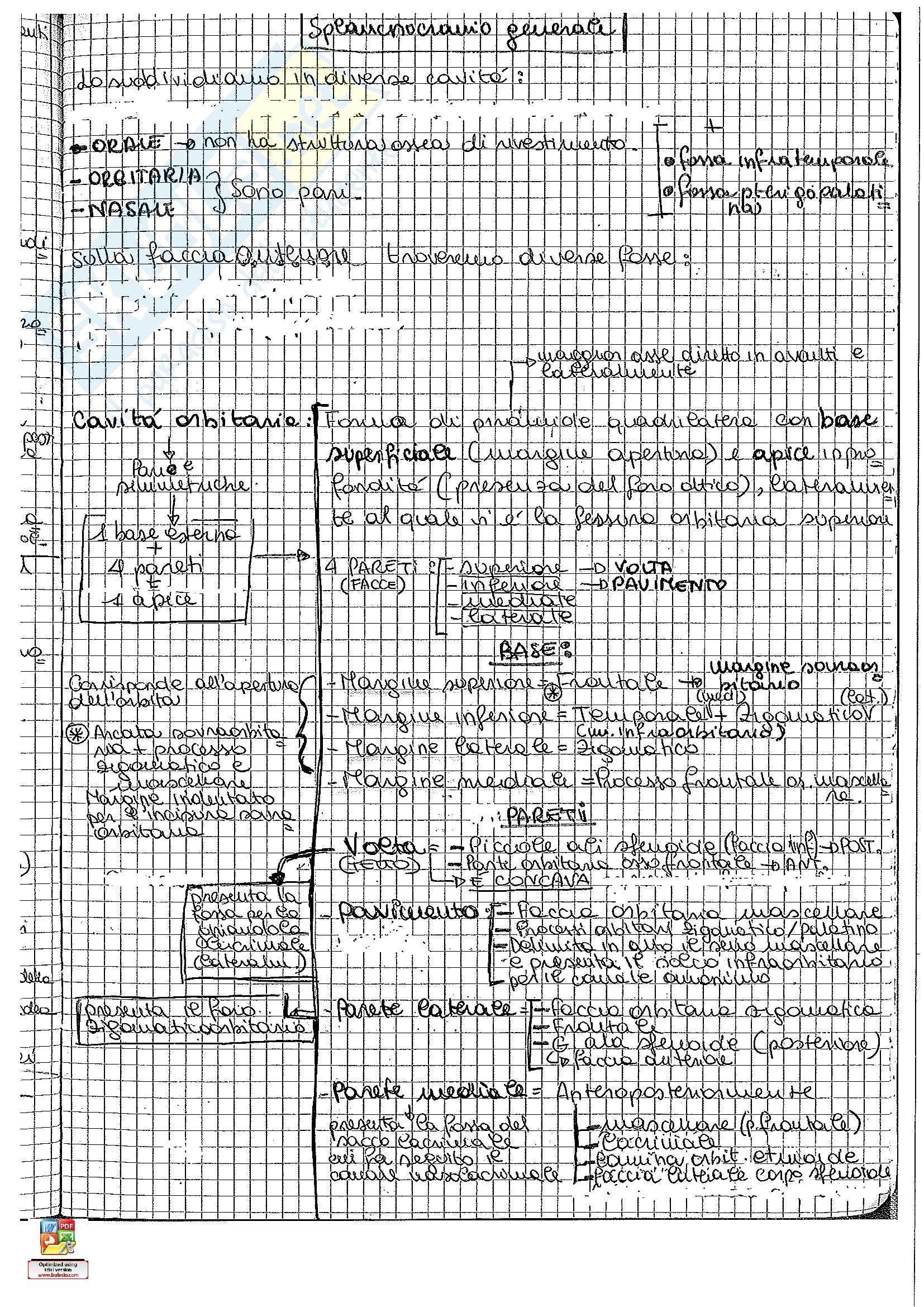 Riassunto esame Anatomia umana: seconda parte, prof. Pirino Pag. 96