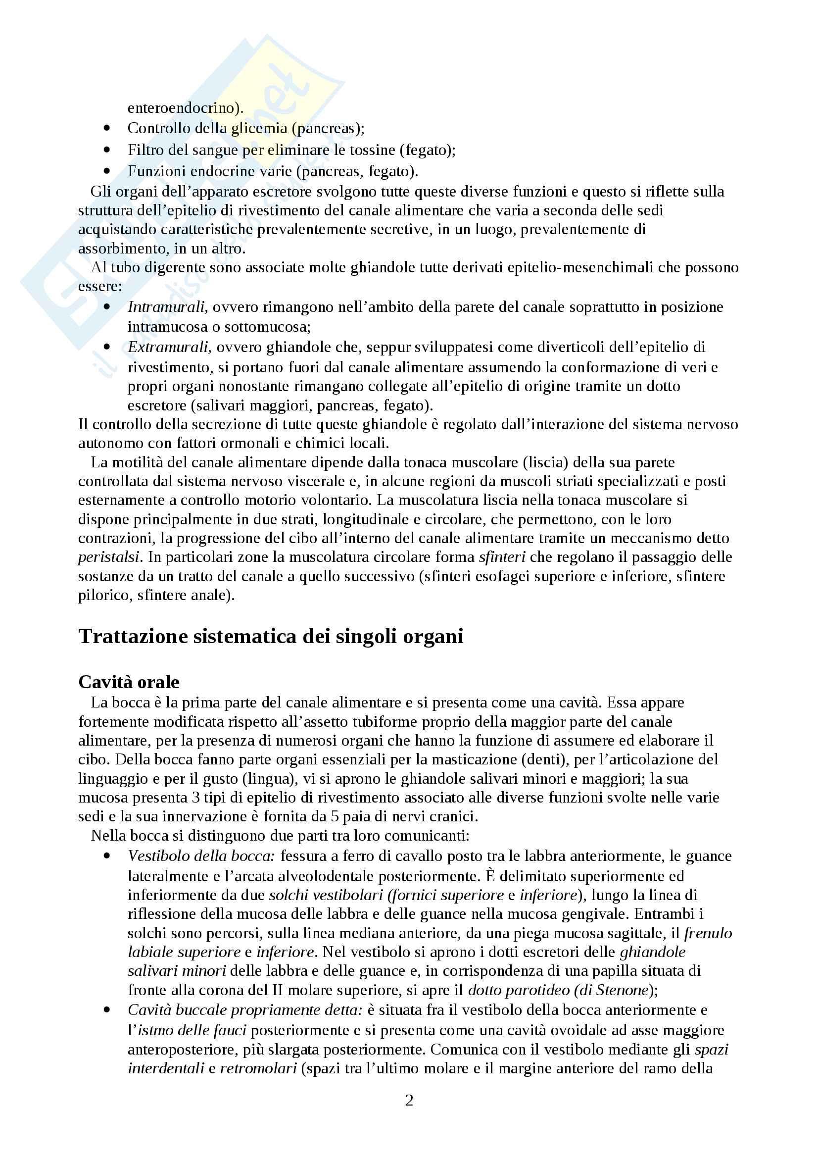 Apparato digerente Pag. 2