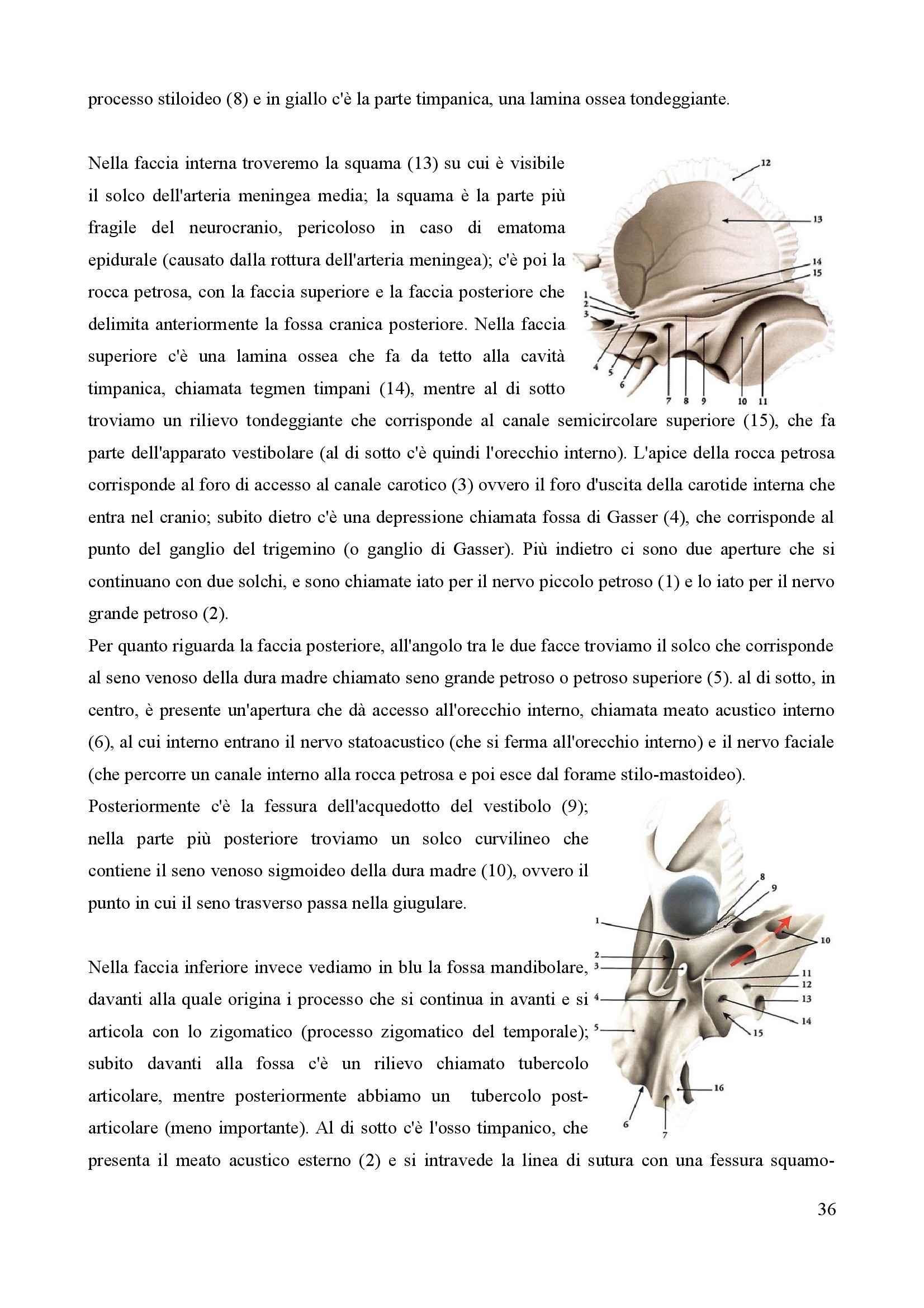Anatomia I - Apparato locomotore, sistema cardiaco e circolatorio Pag. 36