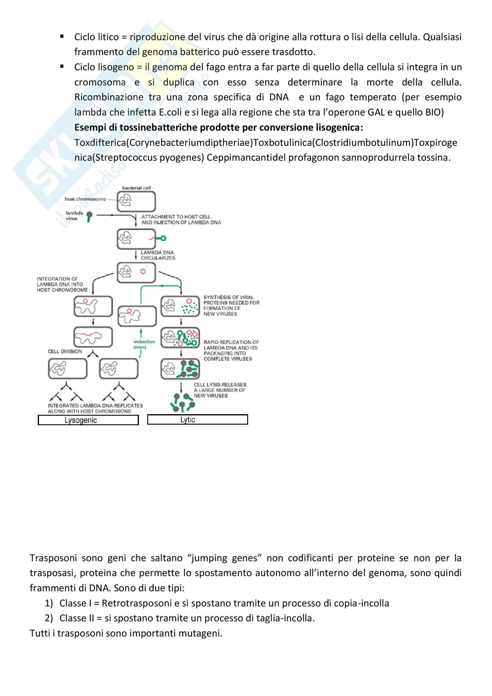 Microbiologia - Appunti Pag. 16