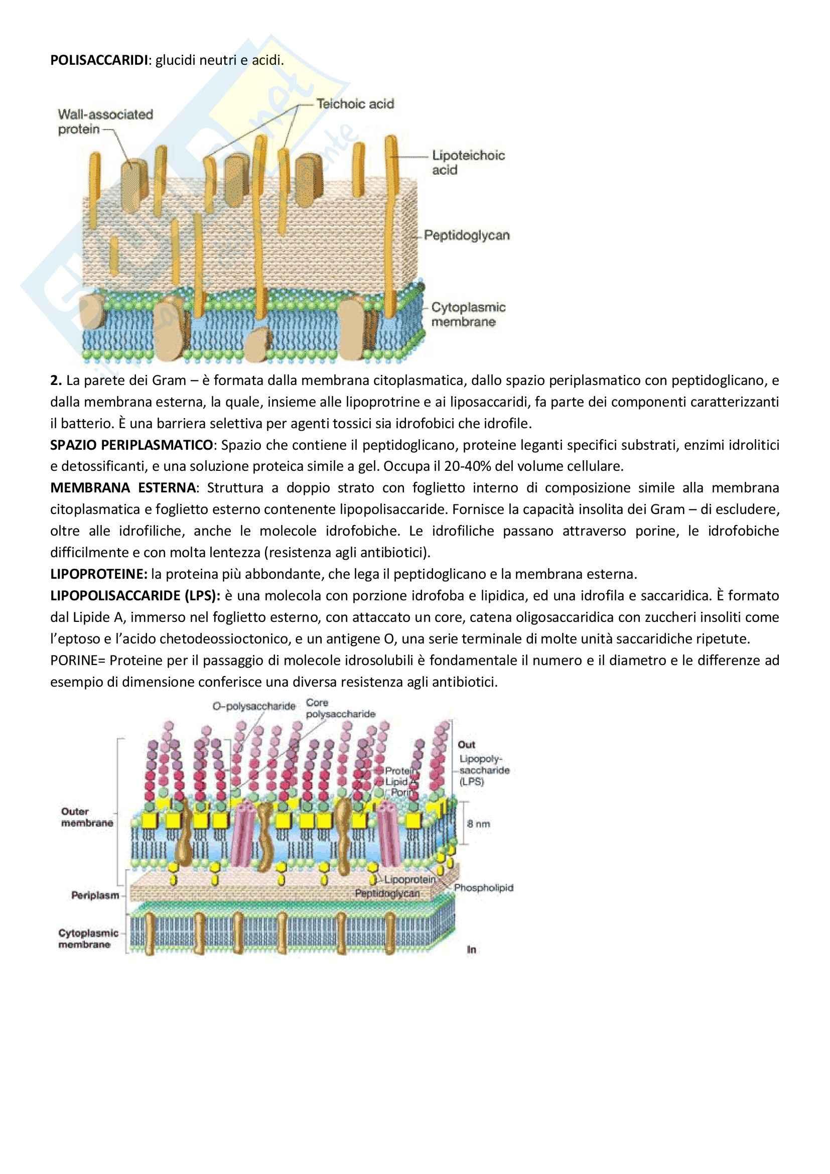 Microbiologia - Appunti Pag. 2