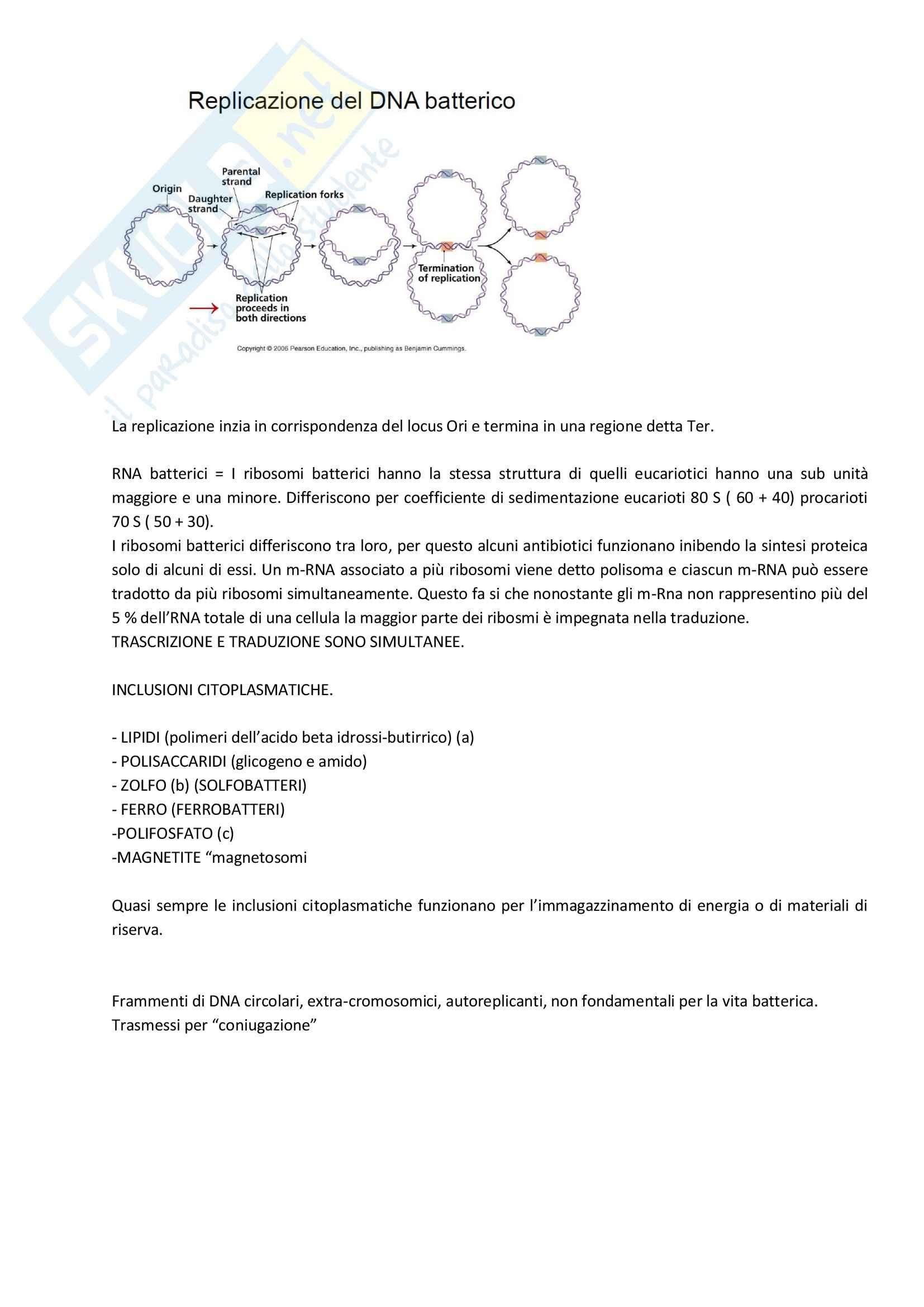 Microbiologia - Appunti Pag. 6