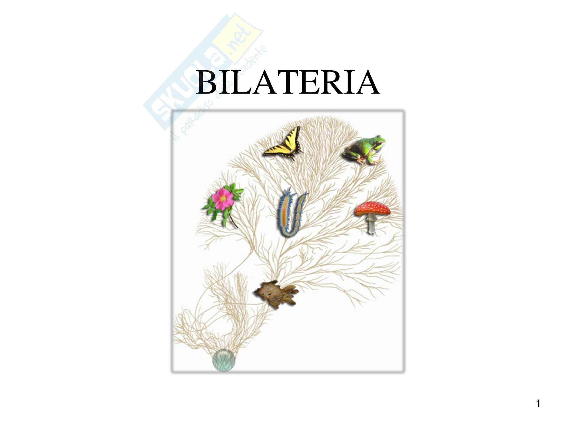 Bilateria, zoologia, scienze biologiche