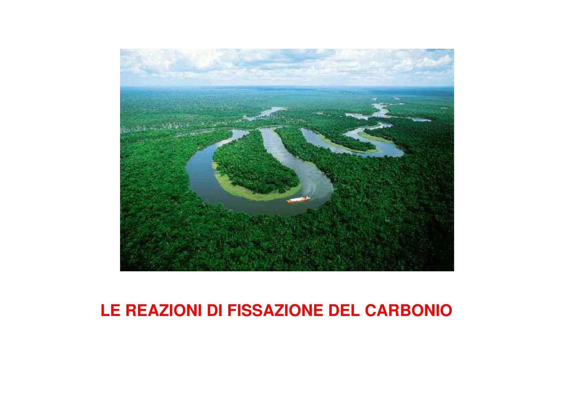 Fissazione del carbonio