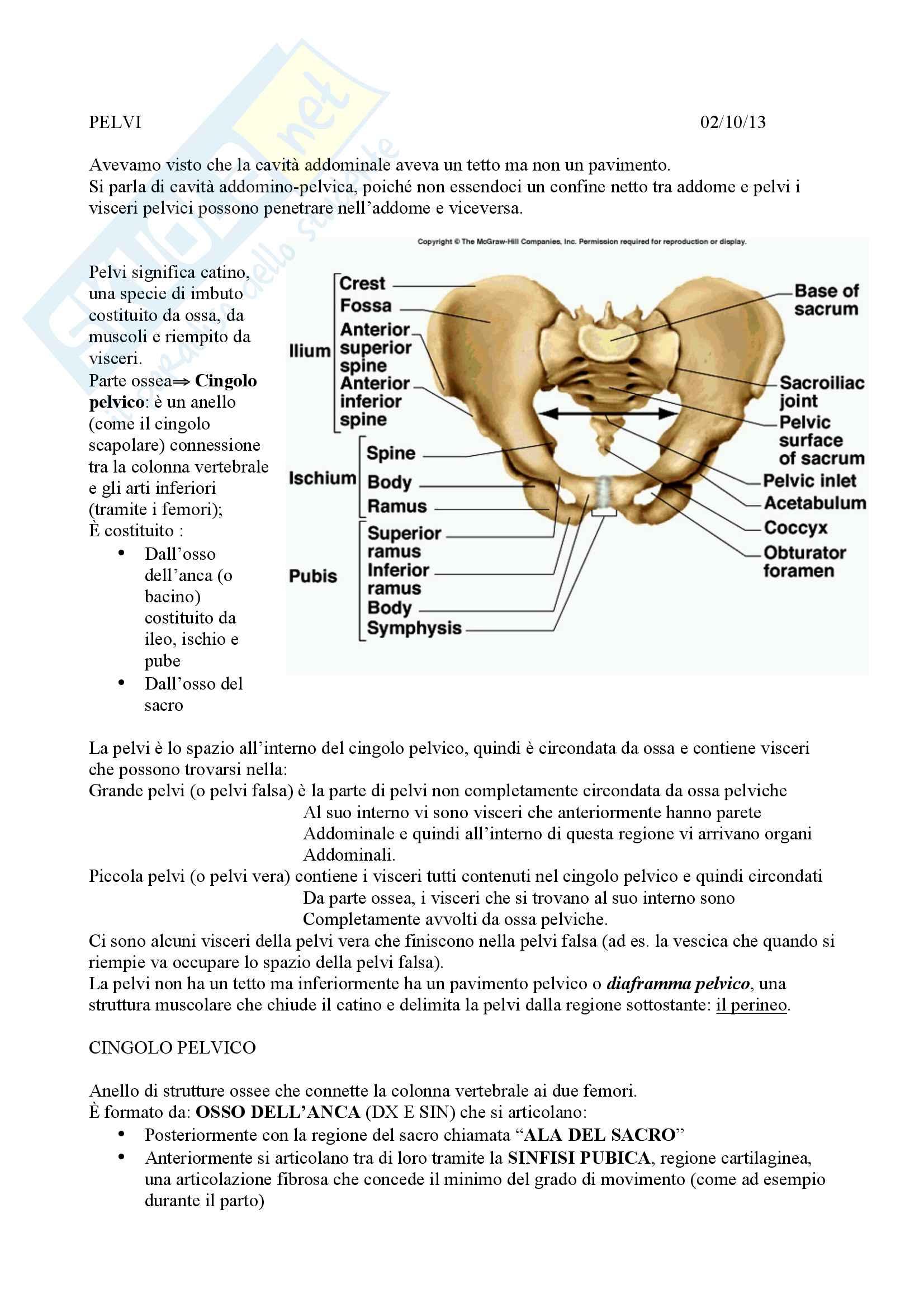 Appunti di Anatomia umana - Pelvi e riproduzione