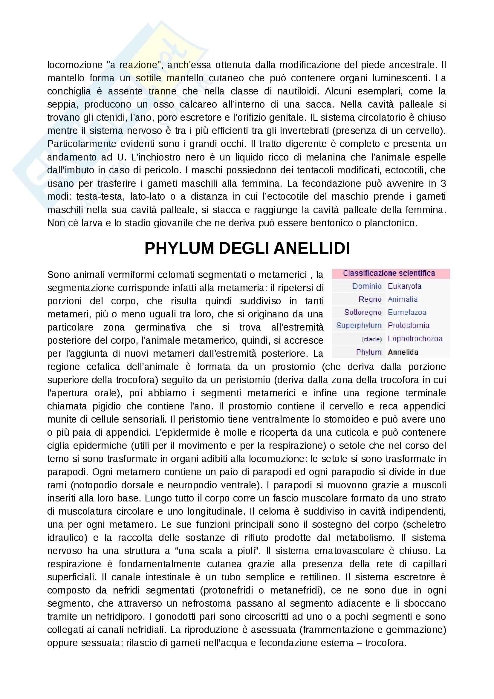 Zoologia  - Appunti Pag. 11