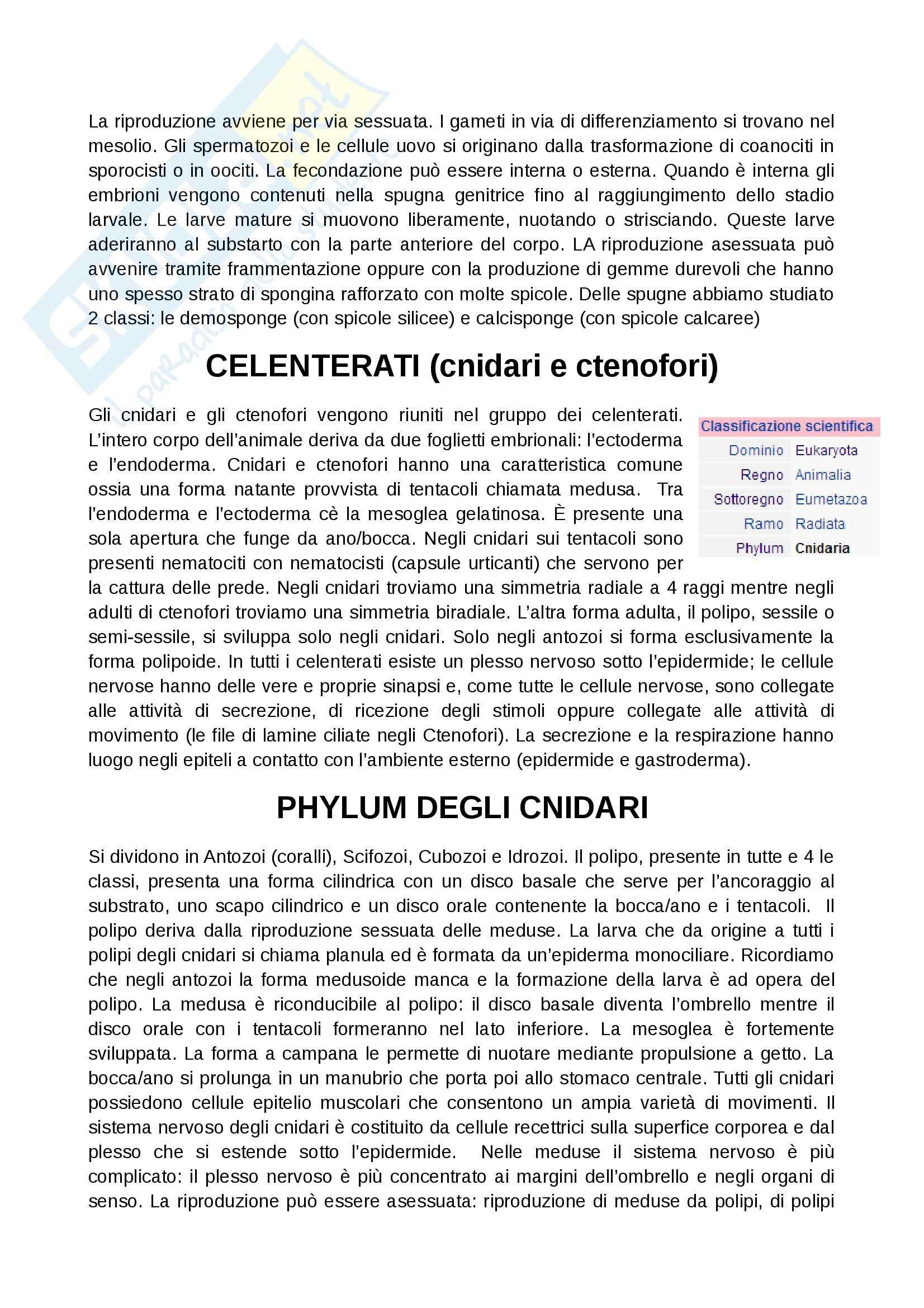 Zoologia  - Appunti Pag. 2