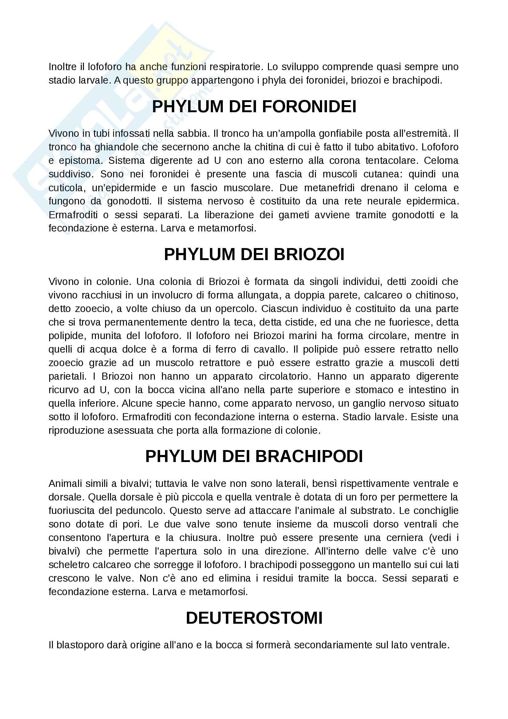 Zoologia  - Appunti Pag. 31